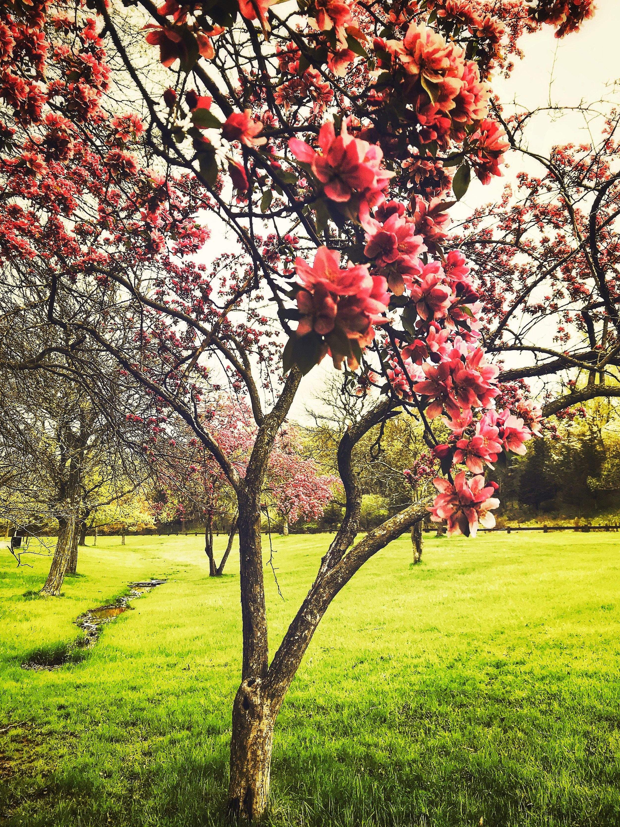 SpringBloomHipsta.jpg