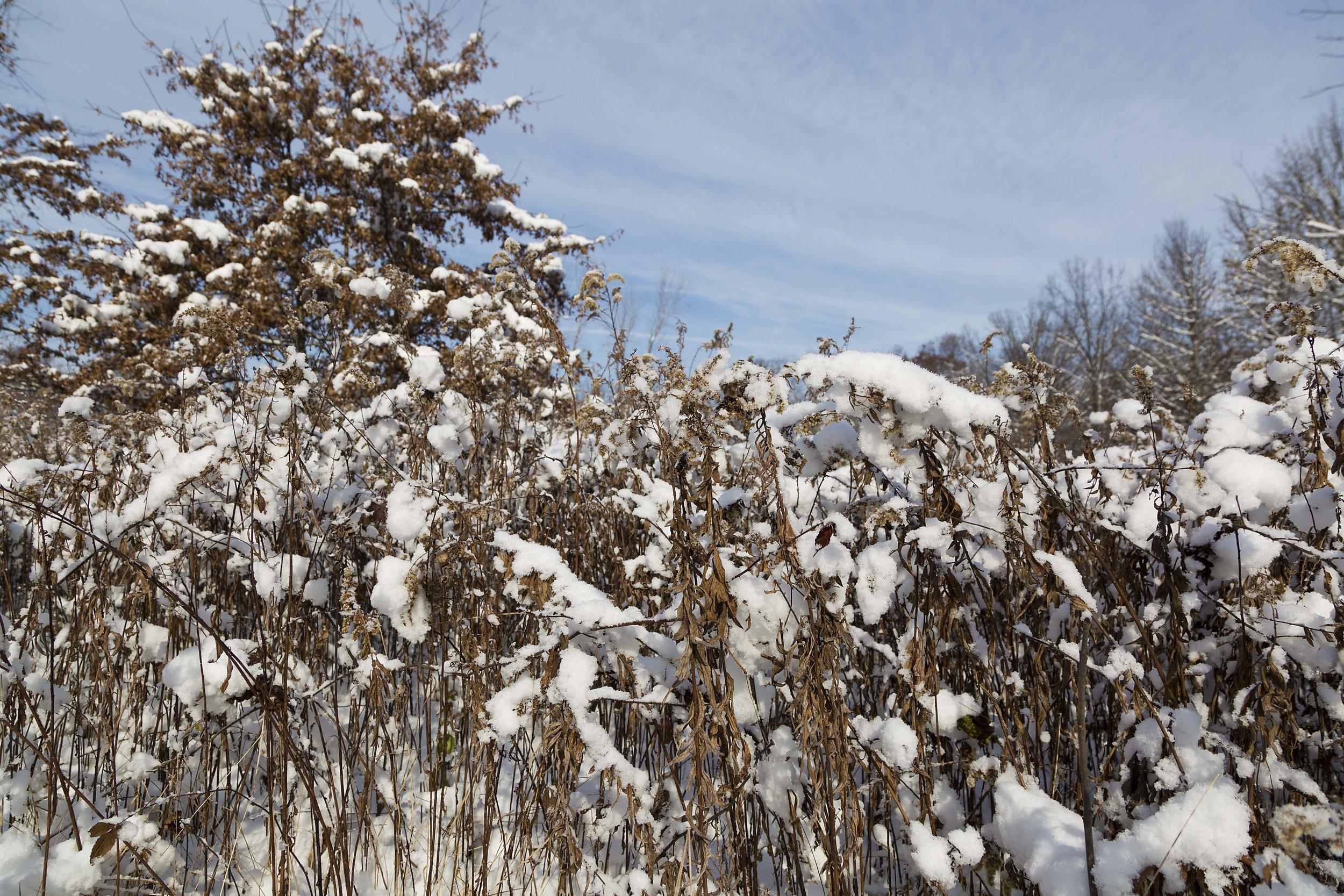 Blendon snow 2106 6.jpg