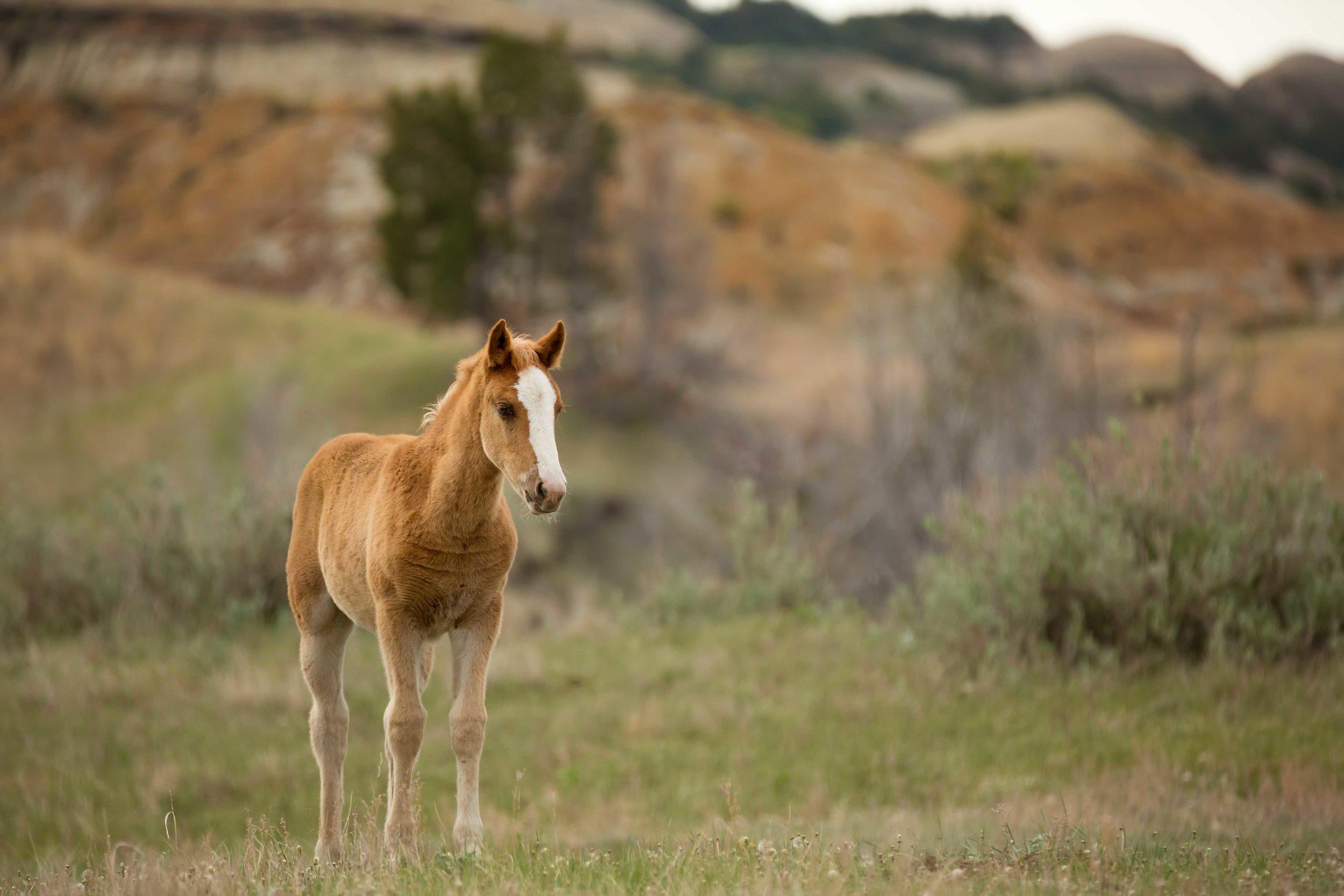 TRNP-Horse-11.jpg