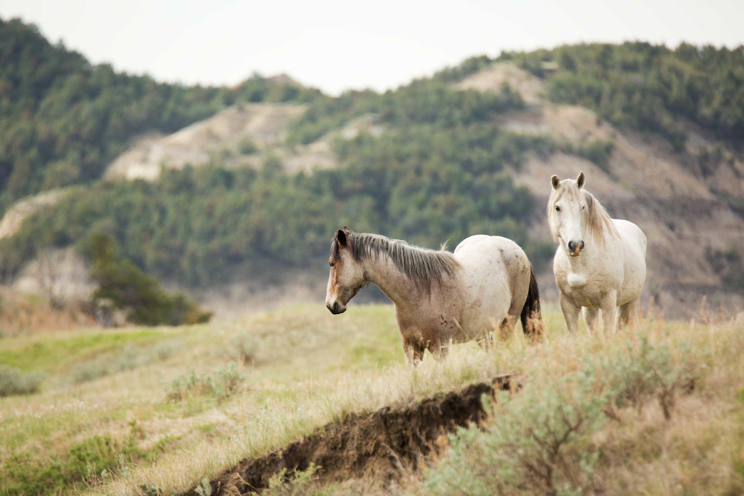TRNP-Horse-13.jpg