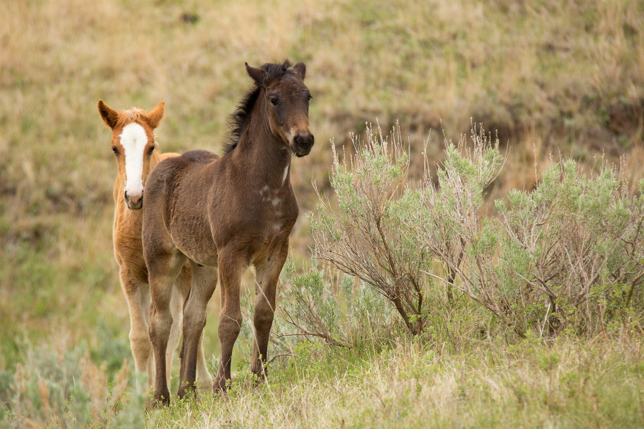TRNP-Horse-14.jpg