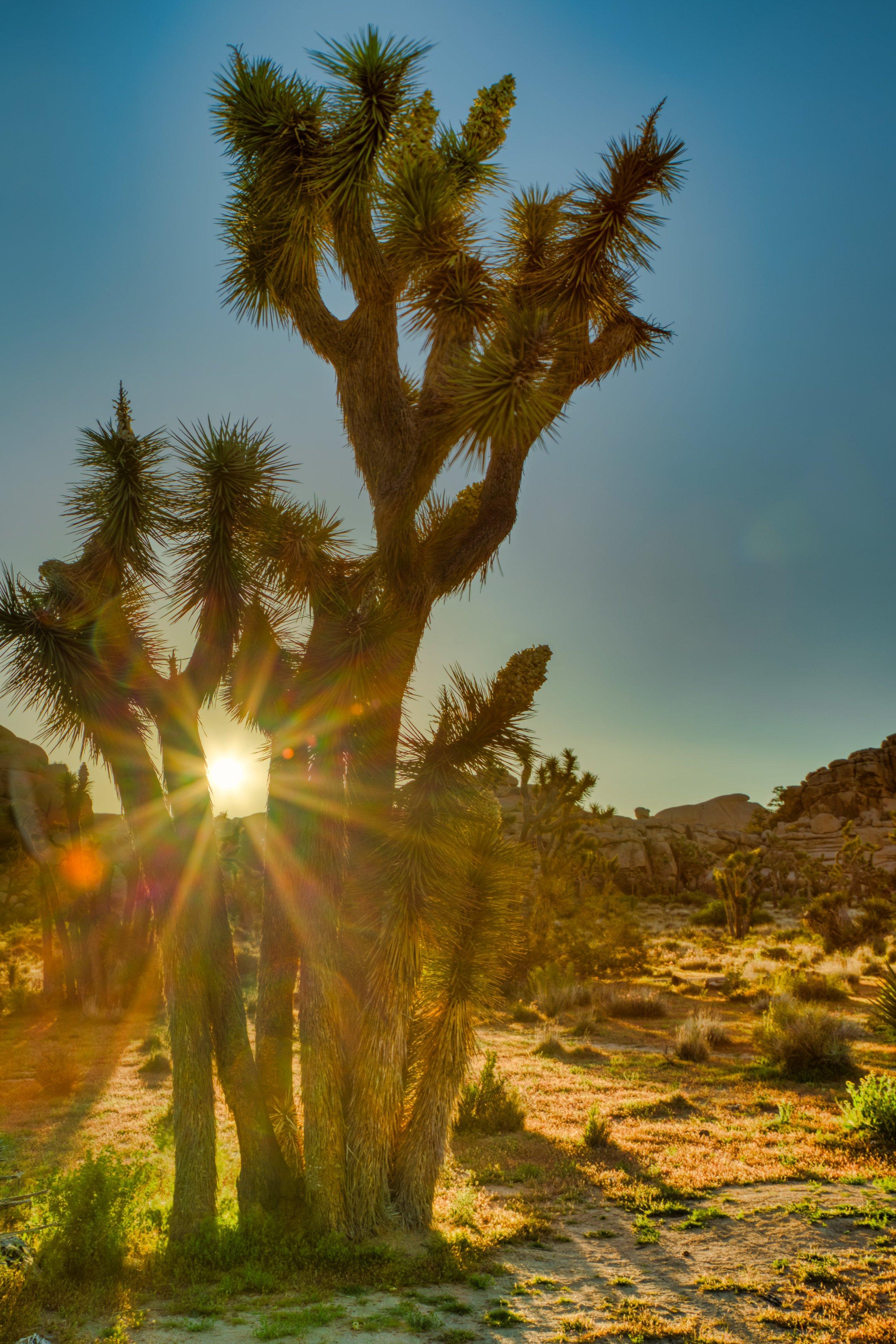 Joshua Tree Sunrsie 3.jpeg