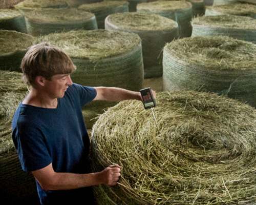 For cows and Calderwood: Jasper Hill hay