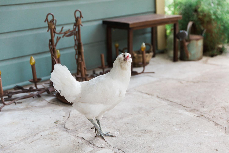 Park Lane Guest House Austin chicken