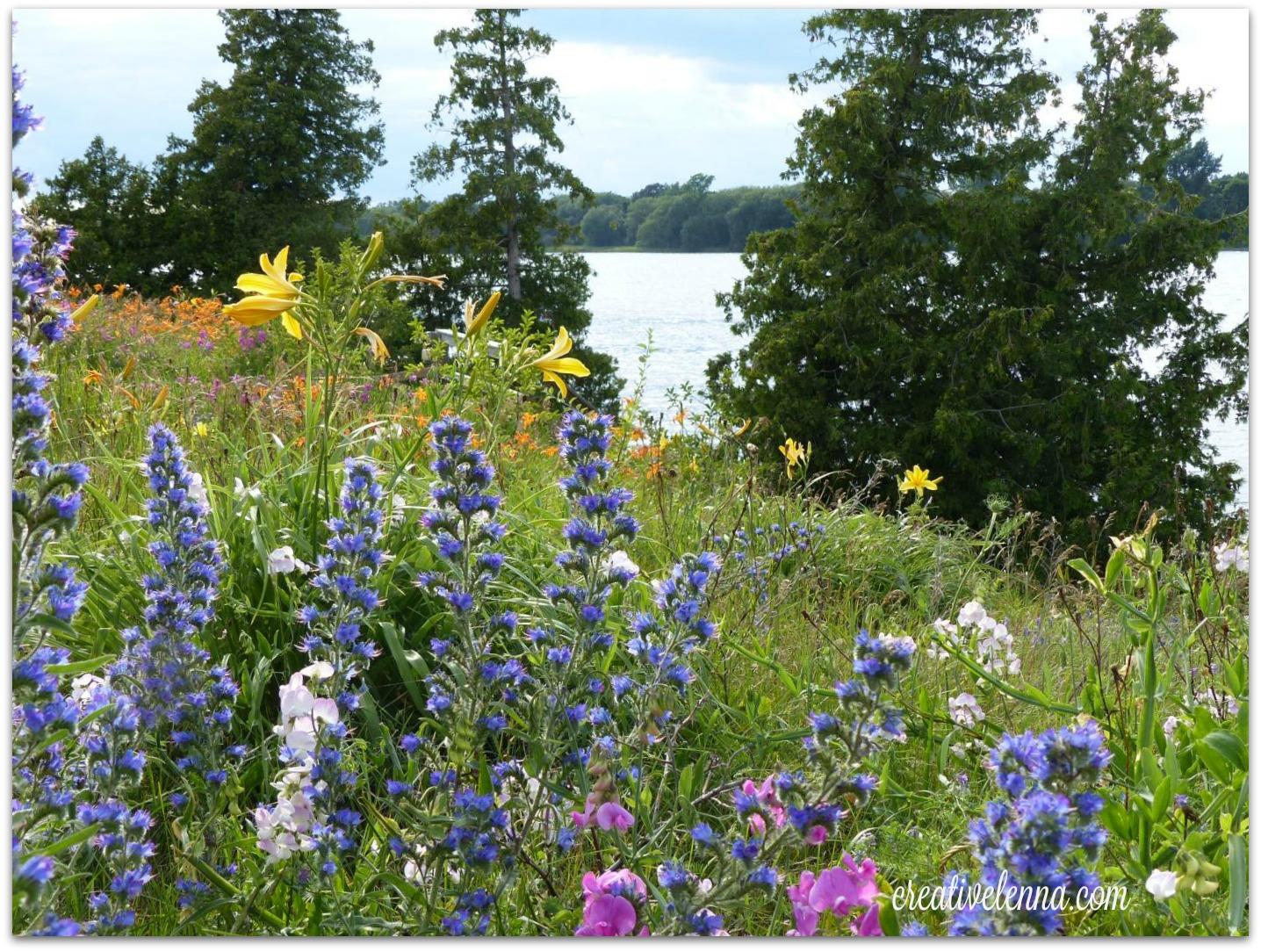 Gorgeous wildflowers