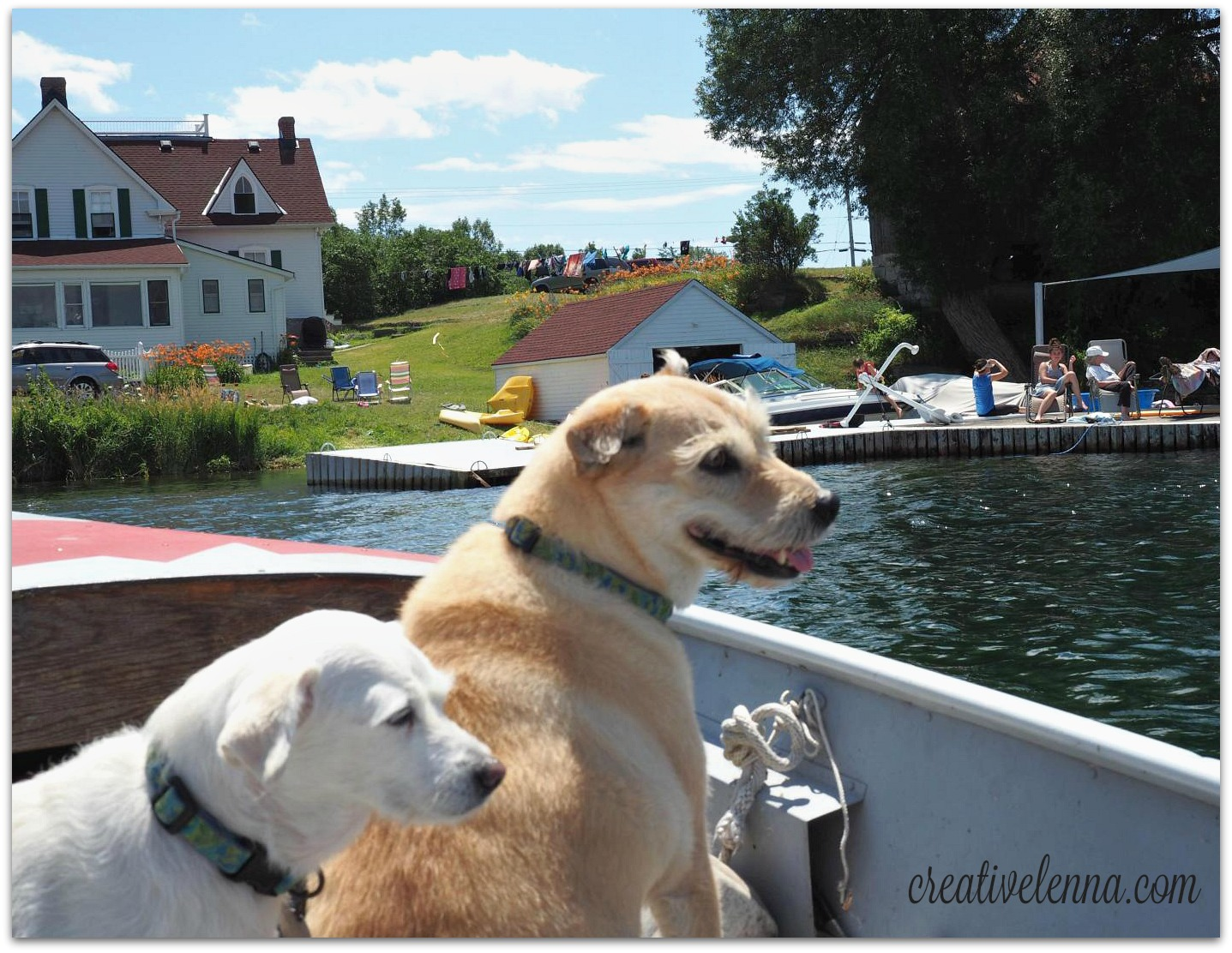 Dogs spy the dock! 2015 in Buzzy