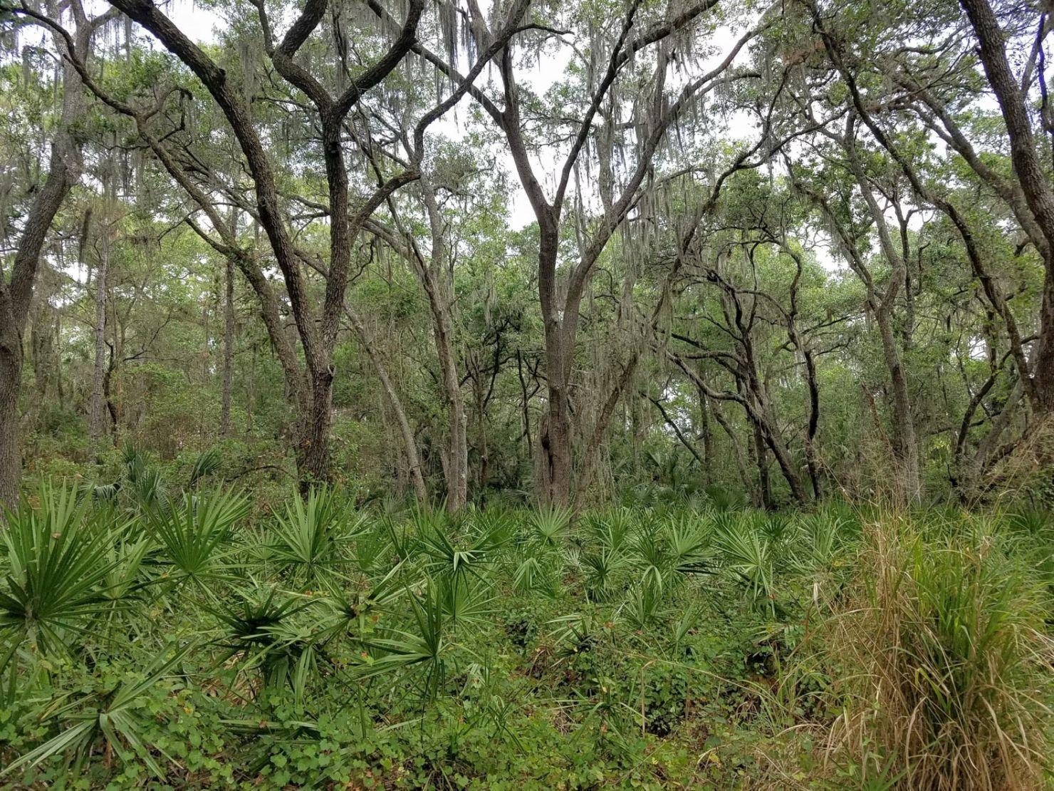 The woods at Conservatory park, Sarasota, FL