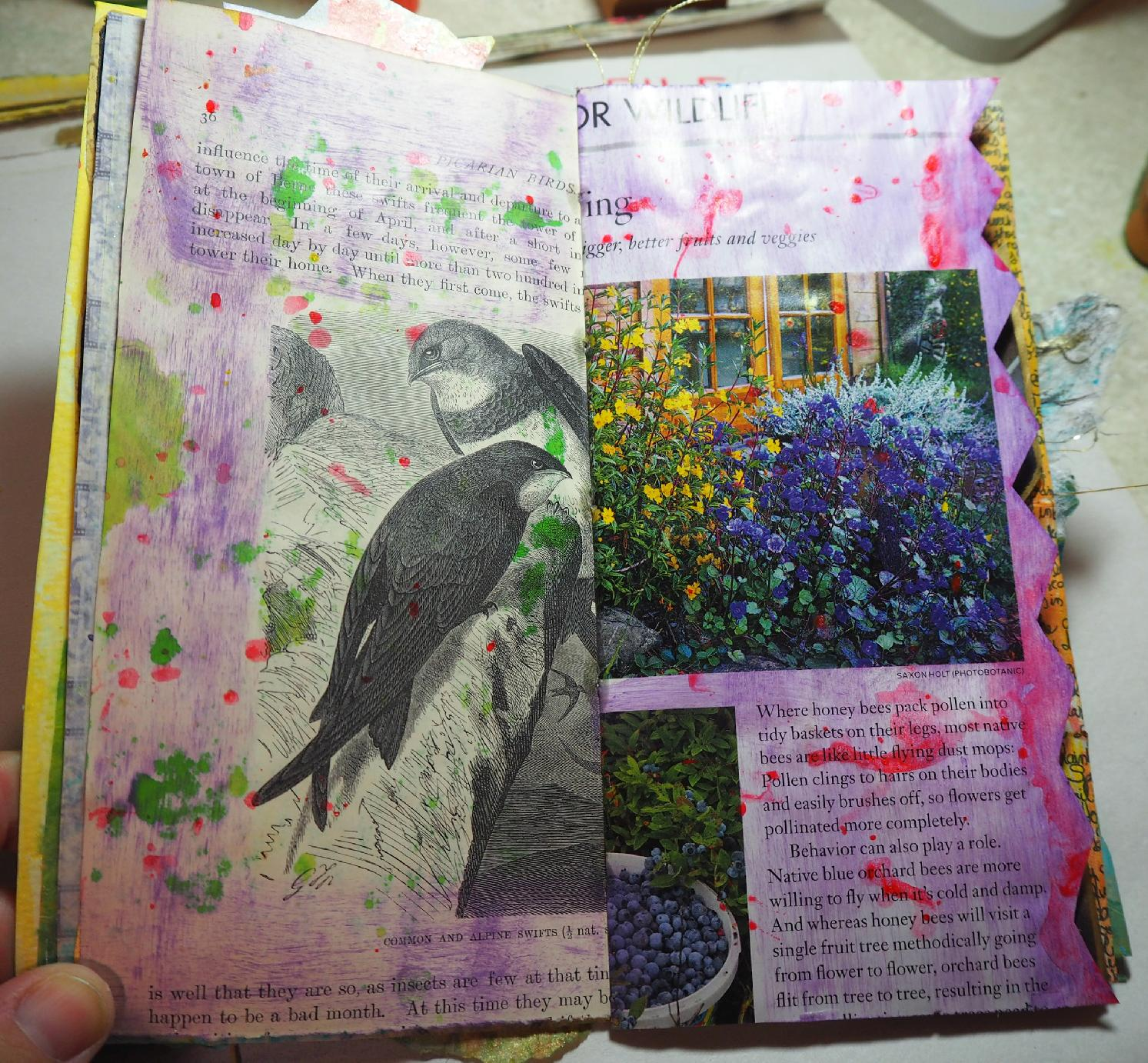 bird page started: lenna