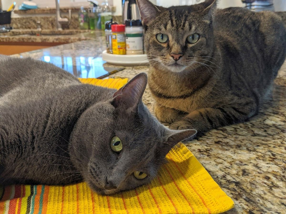 262: photo of our cats