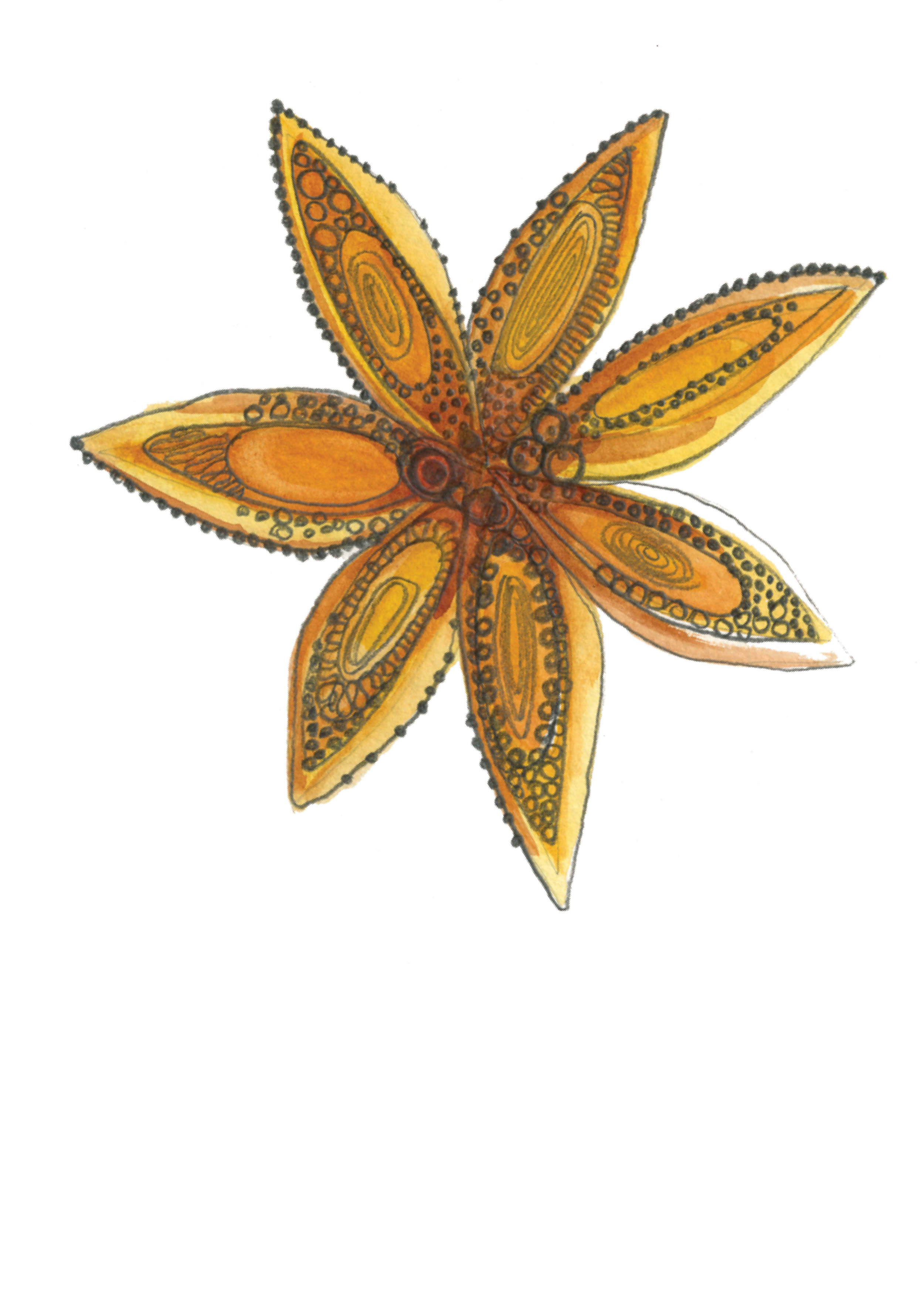 Star Anise by Bridget Melling-Williams