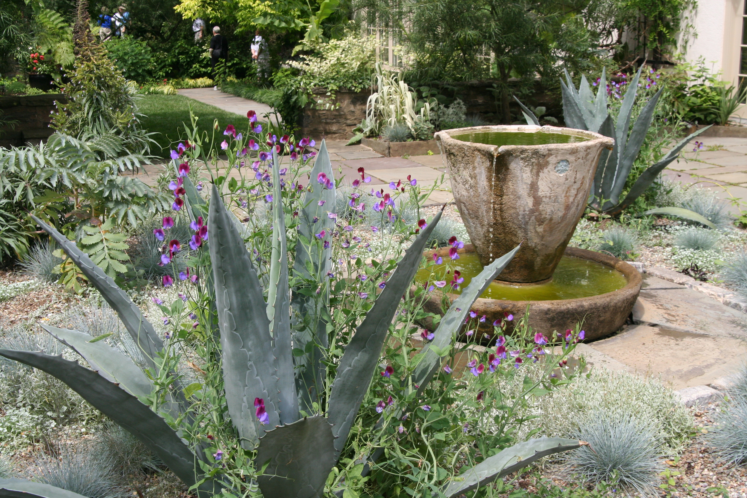 The blue-green, spiky Agave americana is not hardy here, but it thrives in pots that can be brought indoors and out. (photo taken at Chanticleer)