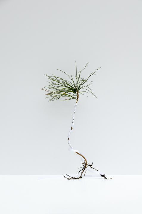 The Gift of Regret  (c) Astrid Reischwitz