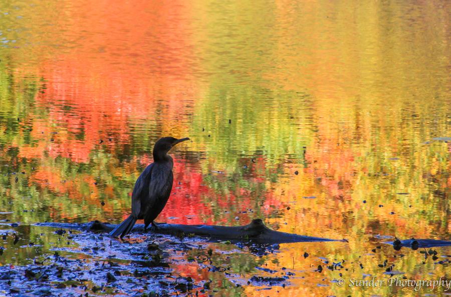 Painted Pond