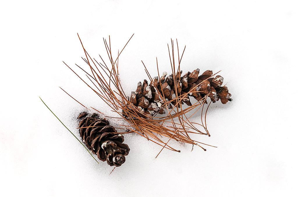 Pine Cones & Needles (c) Bob Bicknell