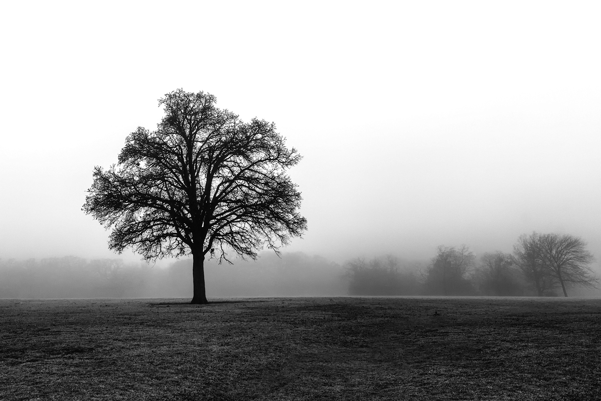 Lonesome Tree   (c) Shantel Rich