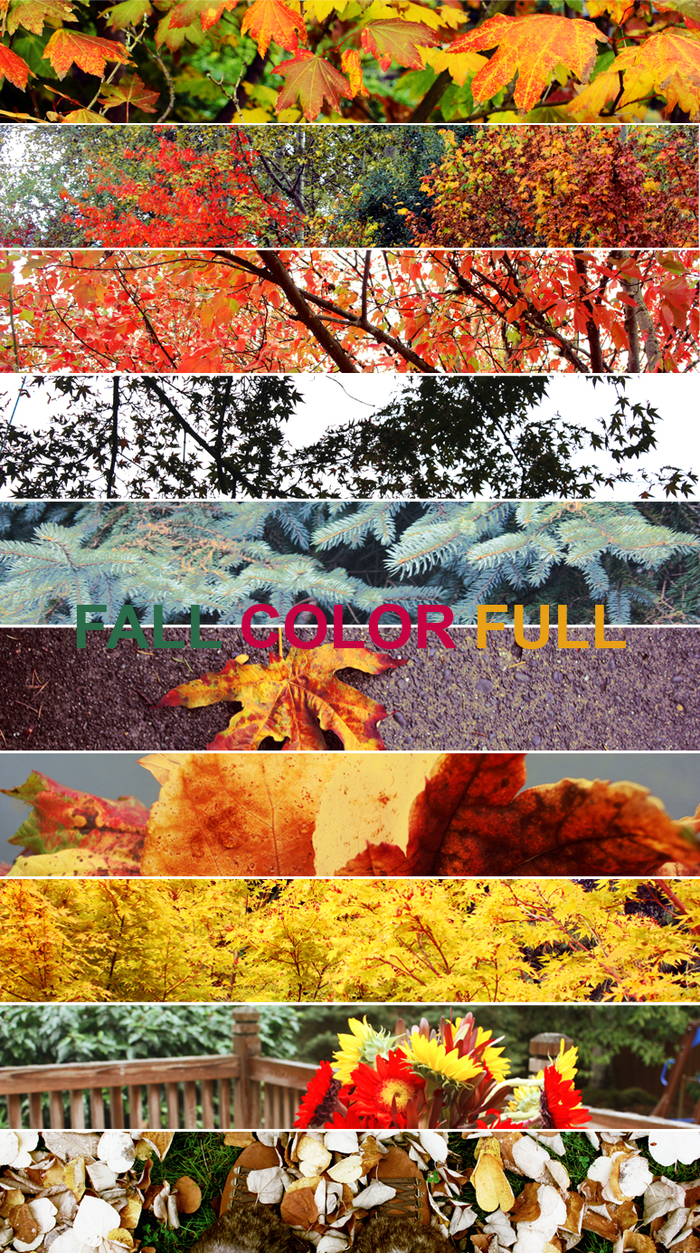 FALL COLOR FULL.jpg