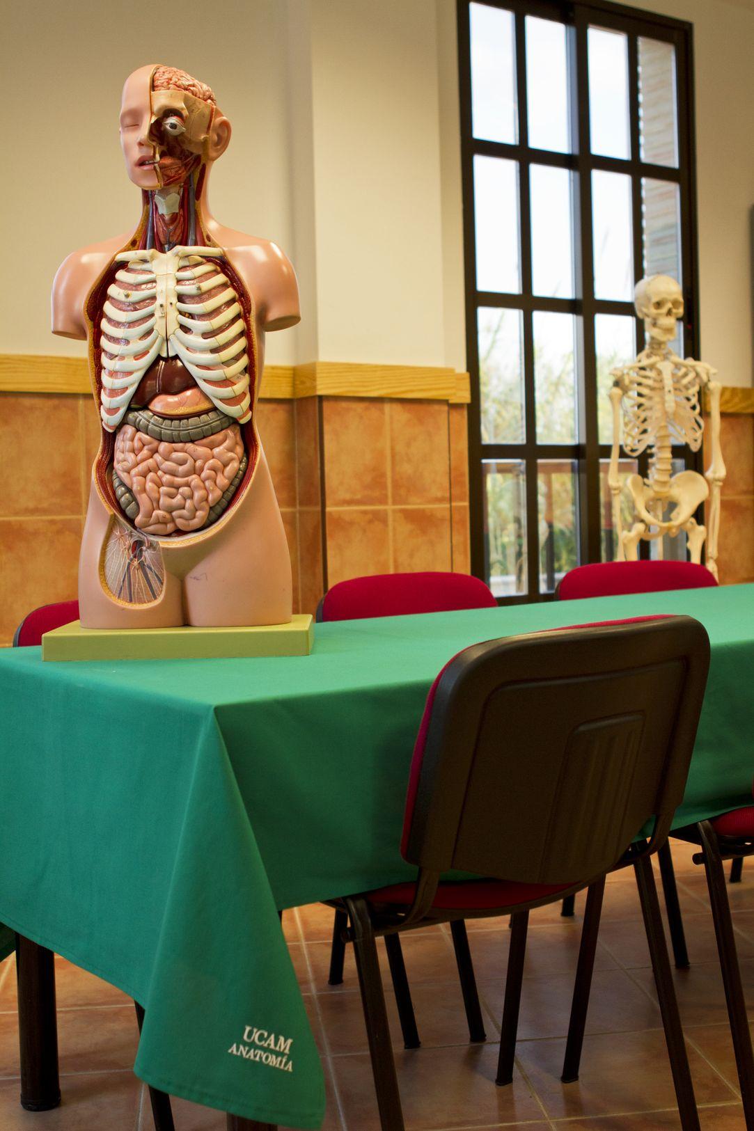 cadaver anatomia_result.jpg