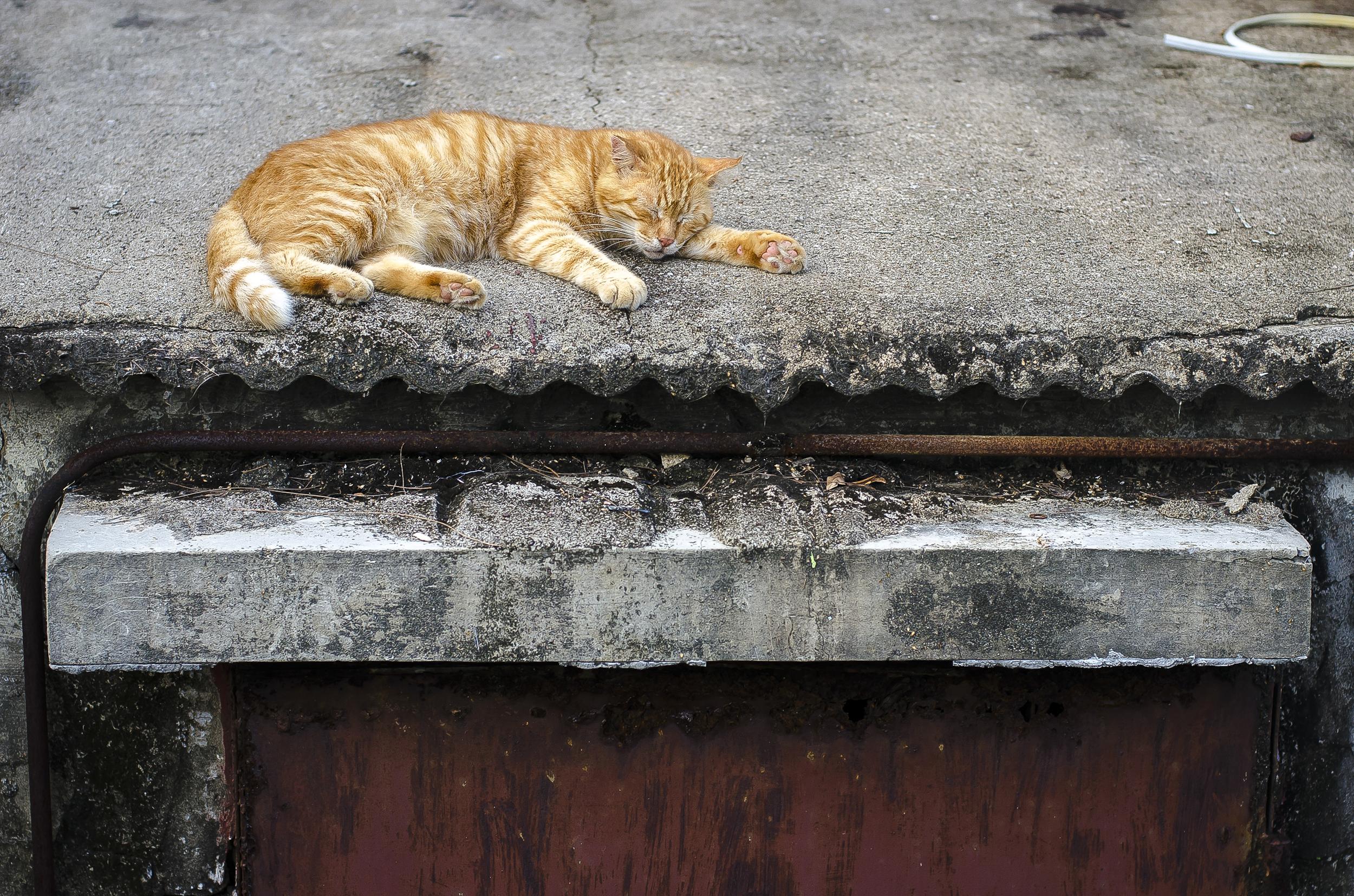 cat-roof.jpg