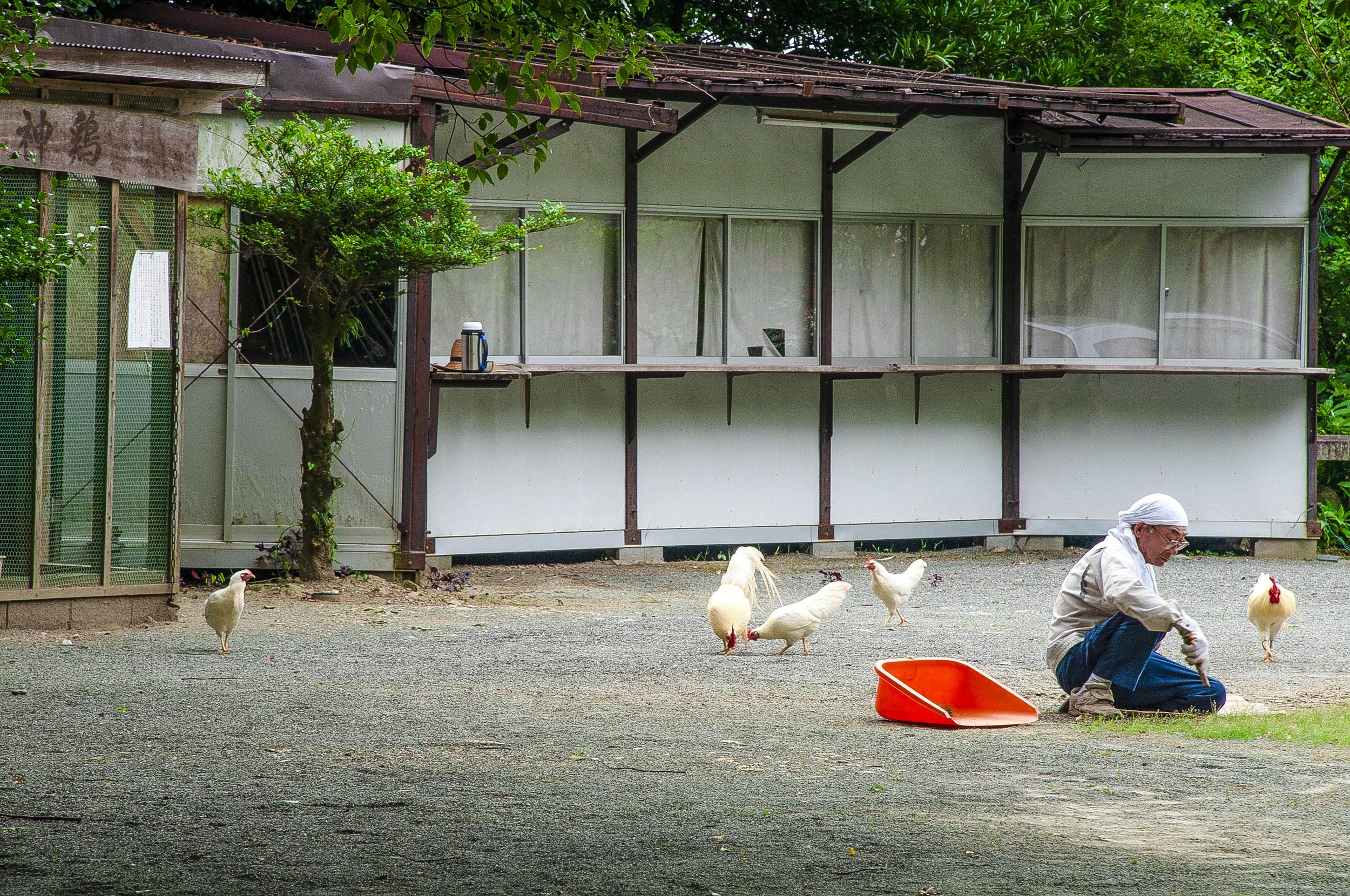 japan-temple-ground.jpg