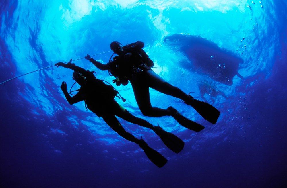 Scuba Dogs Scuba Diving