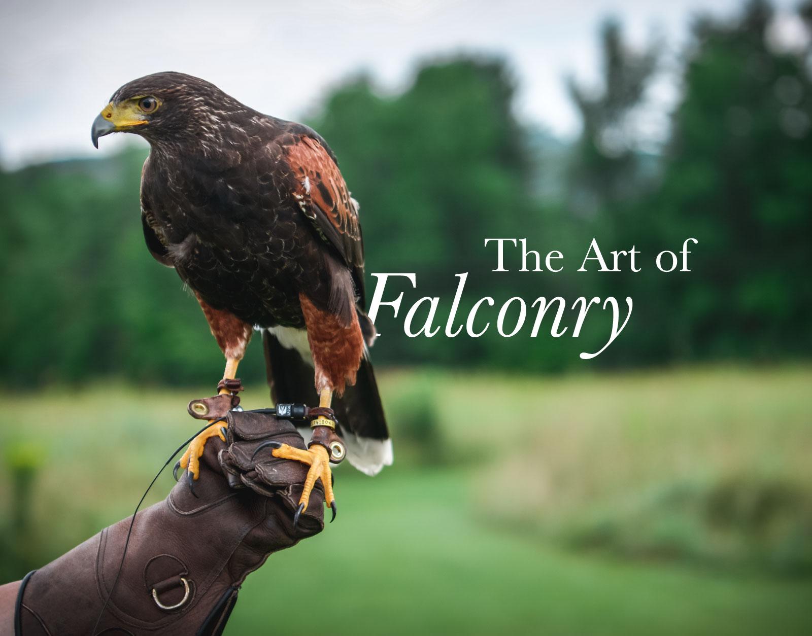 Falconry_Banner.jpg