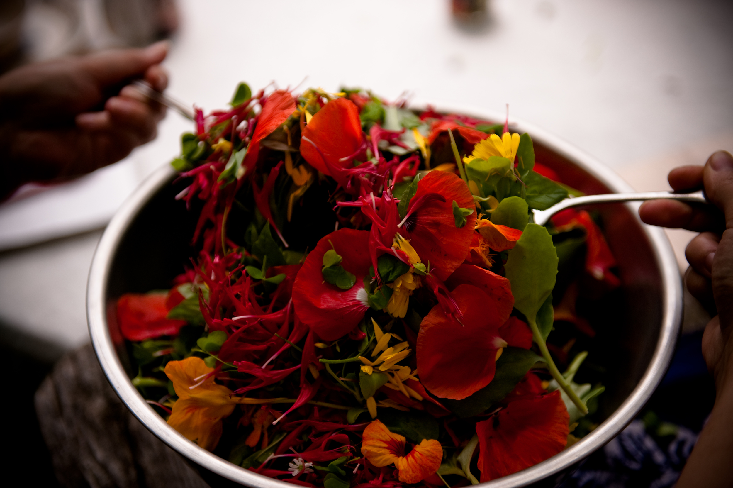 MAG_2014 Salad.jpg
