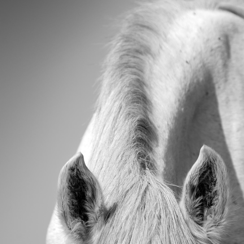 Valerie Franc Photography White Horses