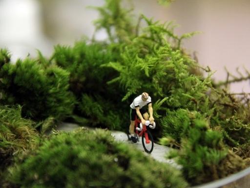 Cyclist-Terrarium-570x384.jpg