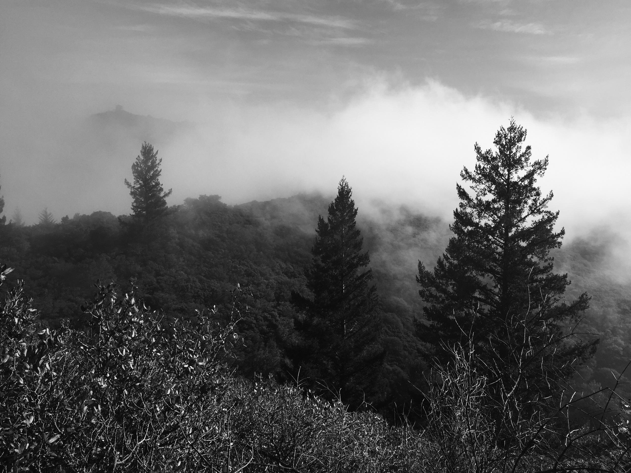 Mount Tam.