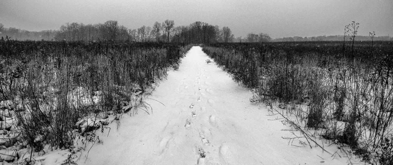 Prairie at Springfield Bog