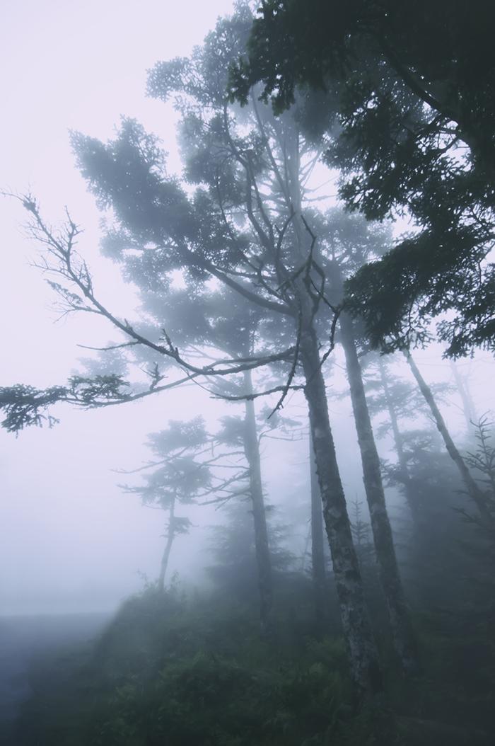 Nature_Trees_Fog001.jpg