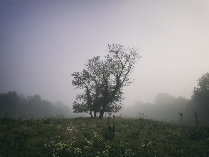 Nature_Tree_Landcp007.jpg