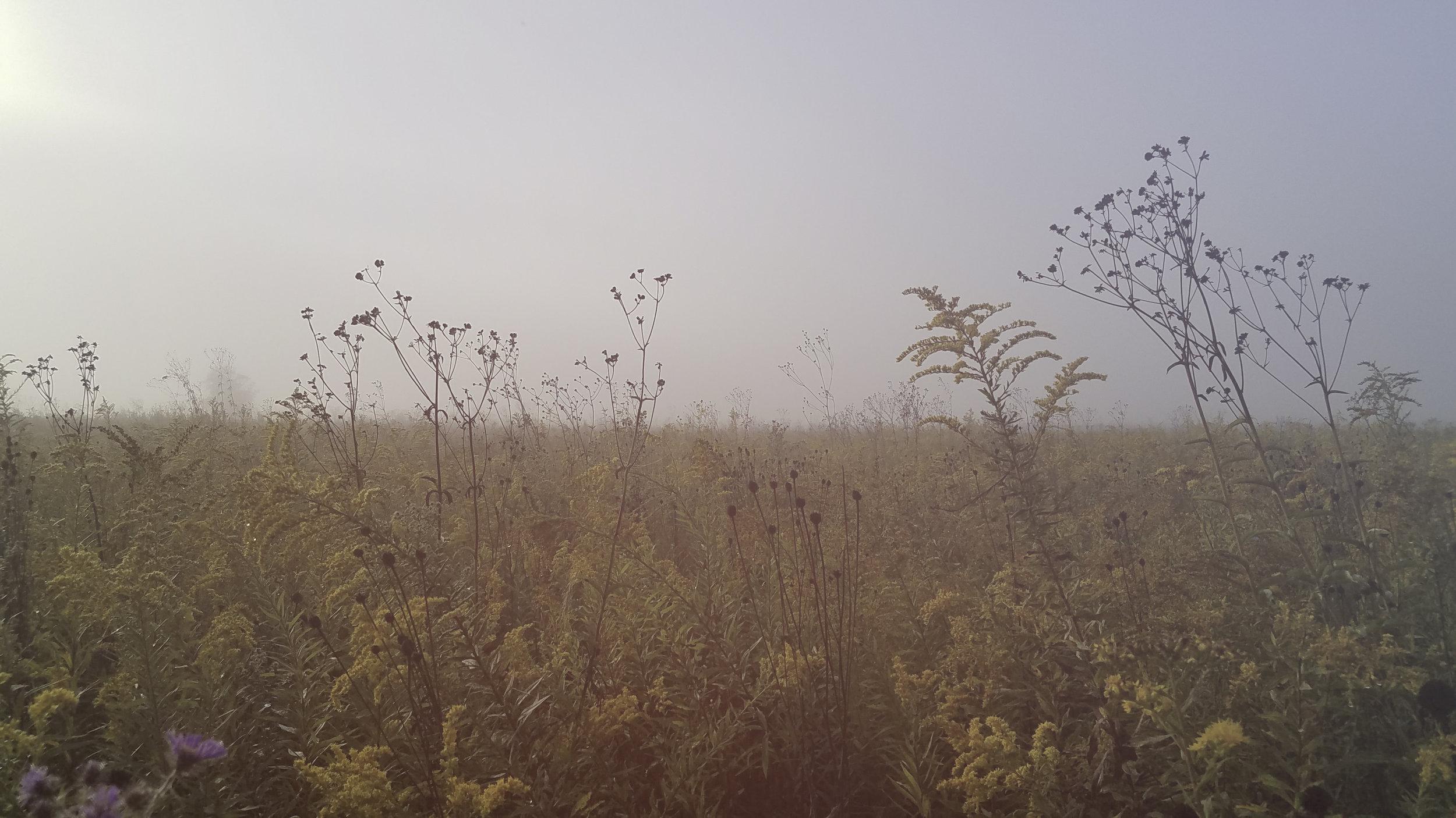 Landscape_Field003_mobile.jpg
