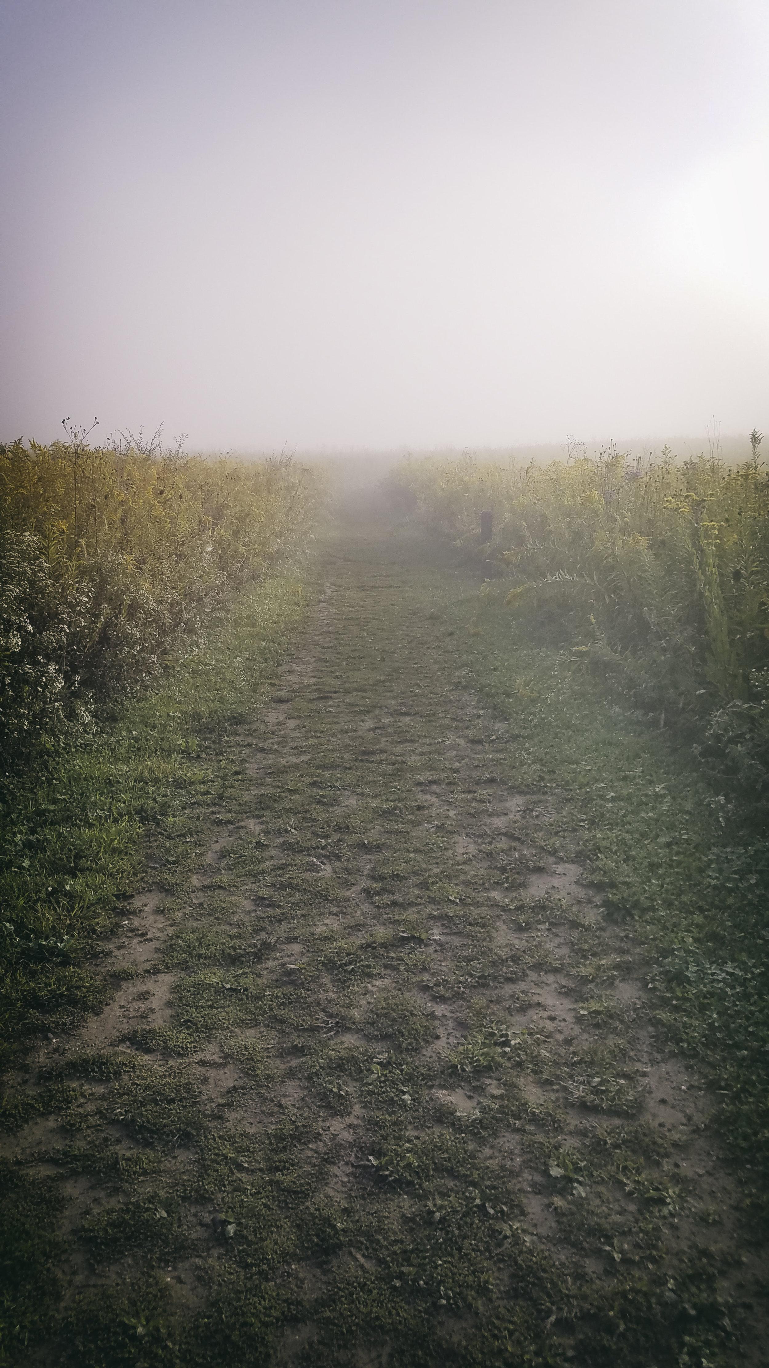 Nature_Pathway001.jpg