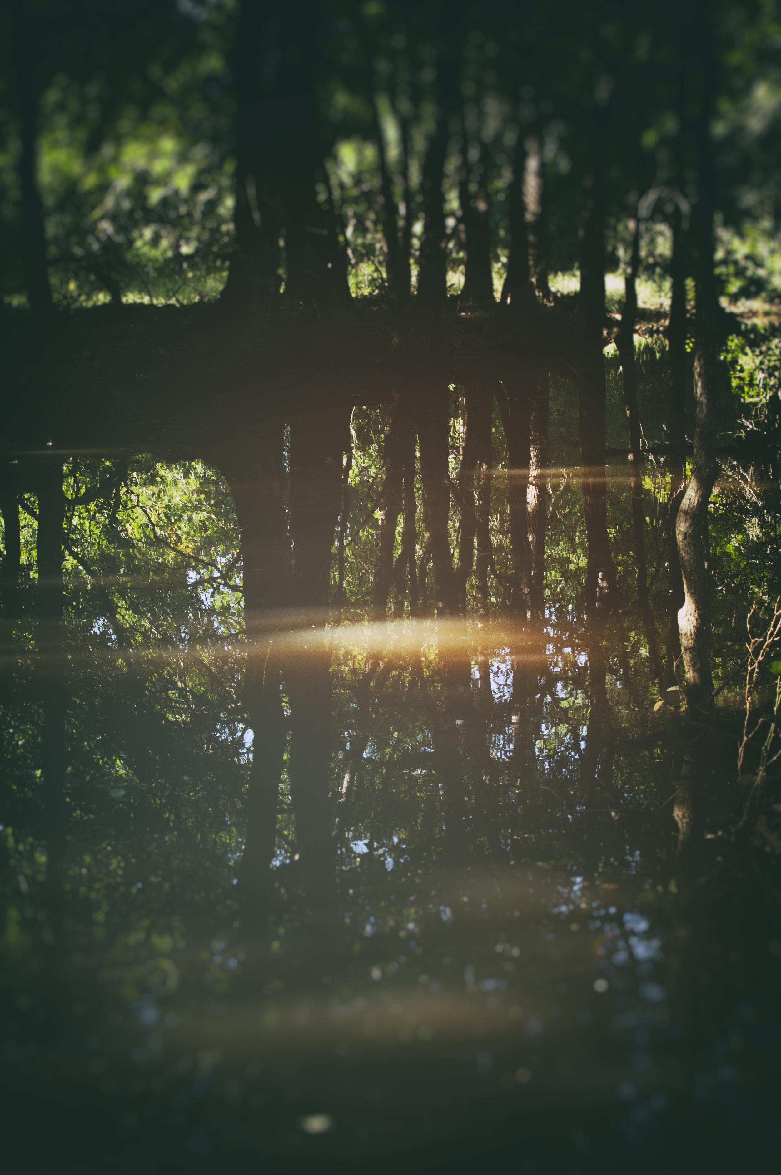 Landscape_Woods_TX002.jpg
