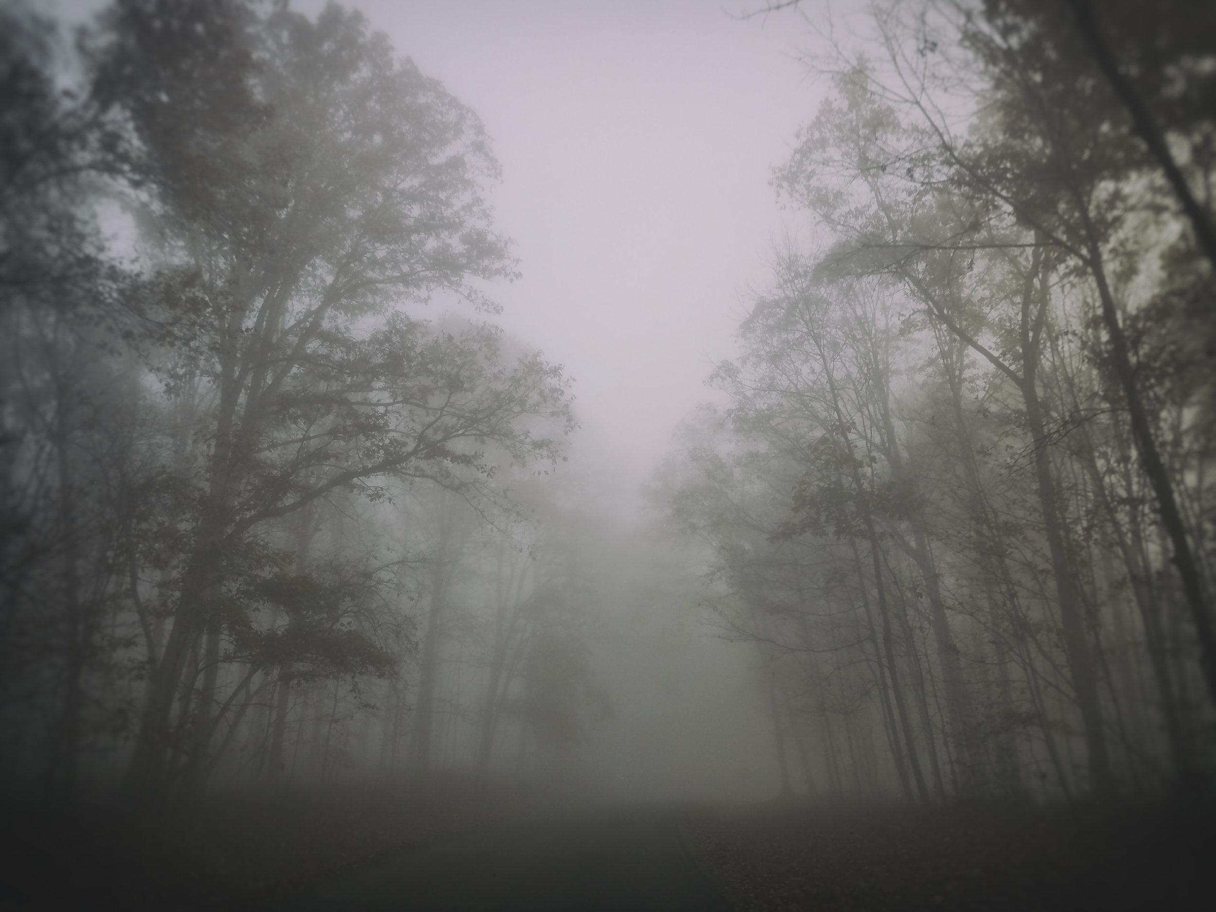 Nature_Tree_Landcp008.jpg