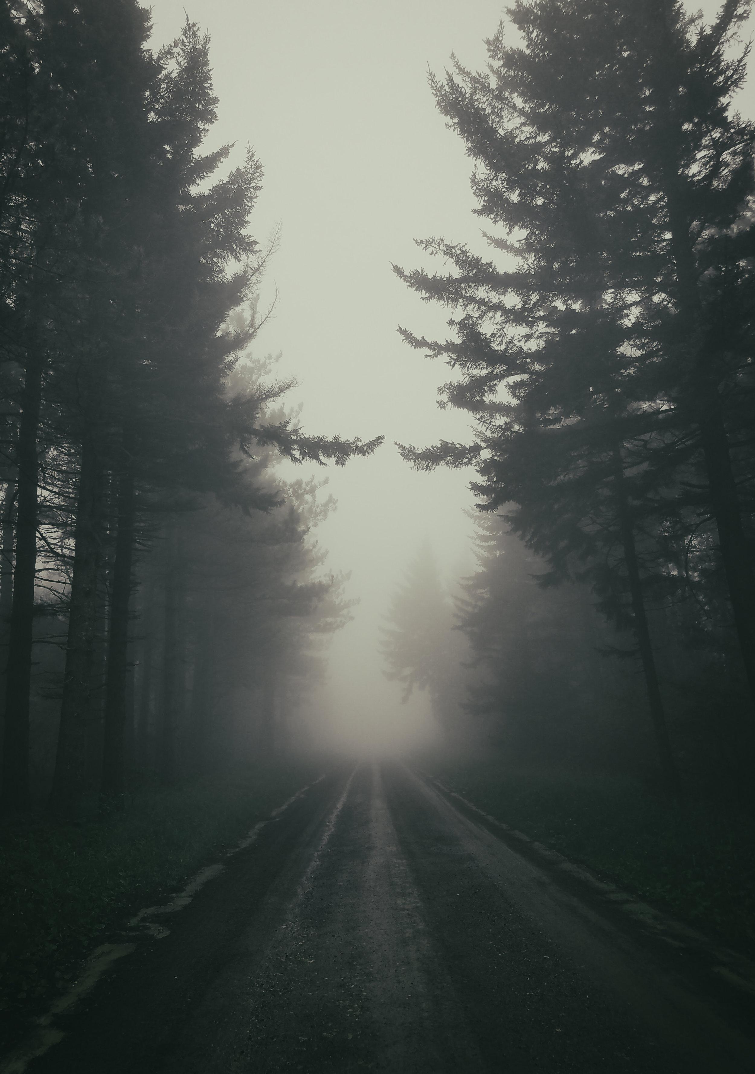 Nature_Tree_Landcp009.jpg