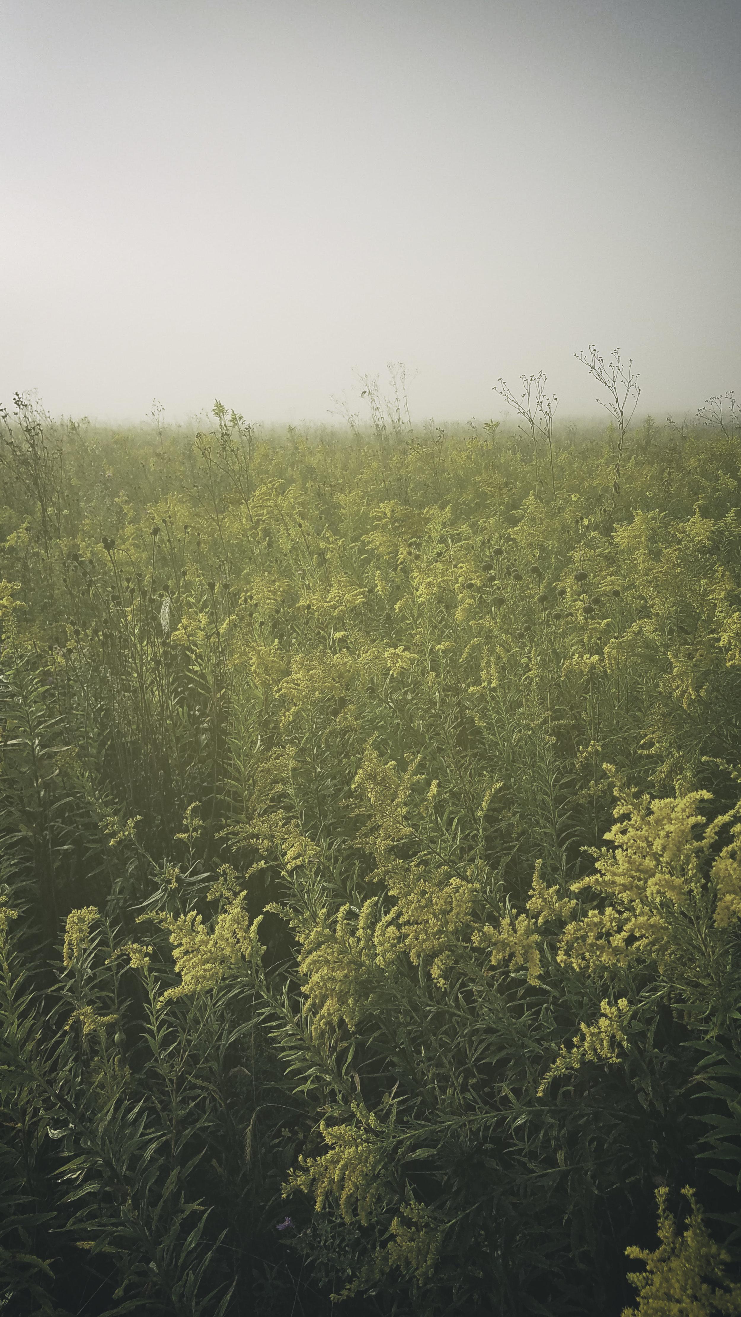 Landscape_Field004_mobile.jpg