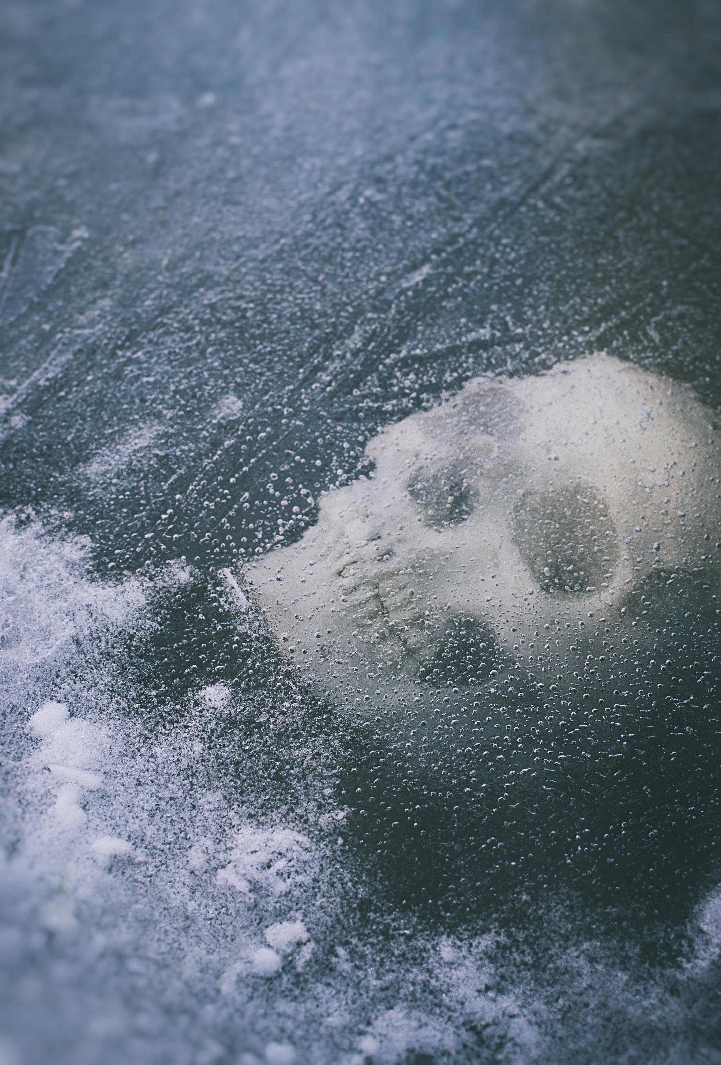 Skull_ice005.jpg