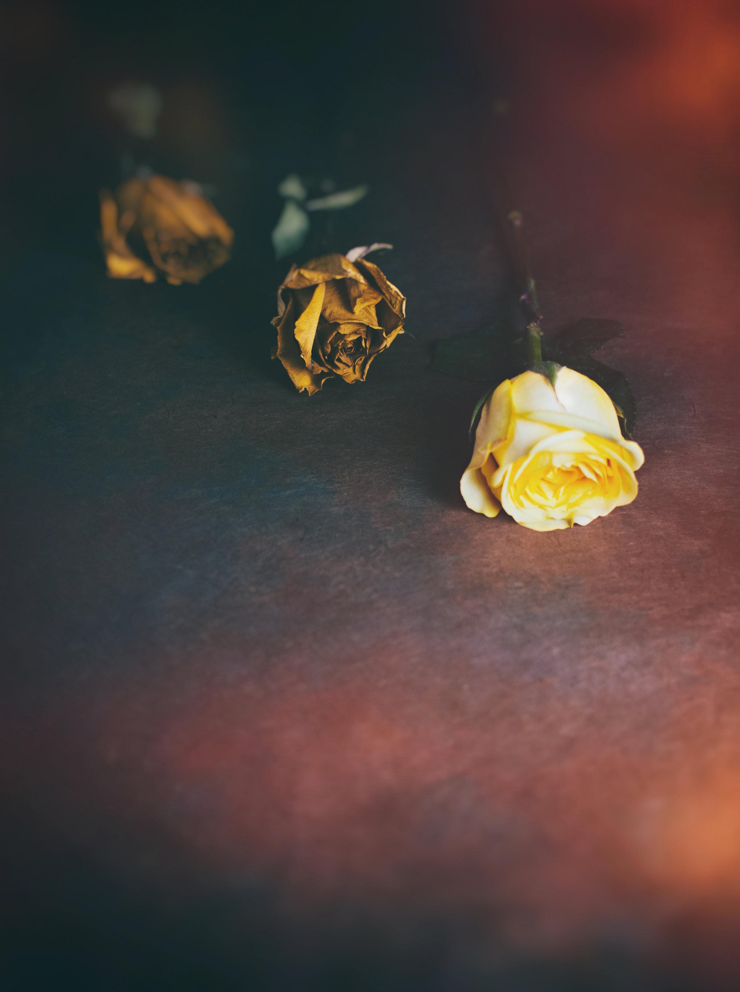 Nature_Detail_Roses003.jpg
