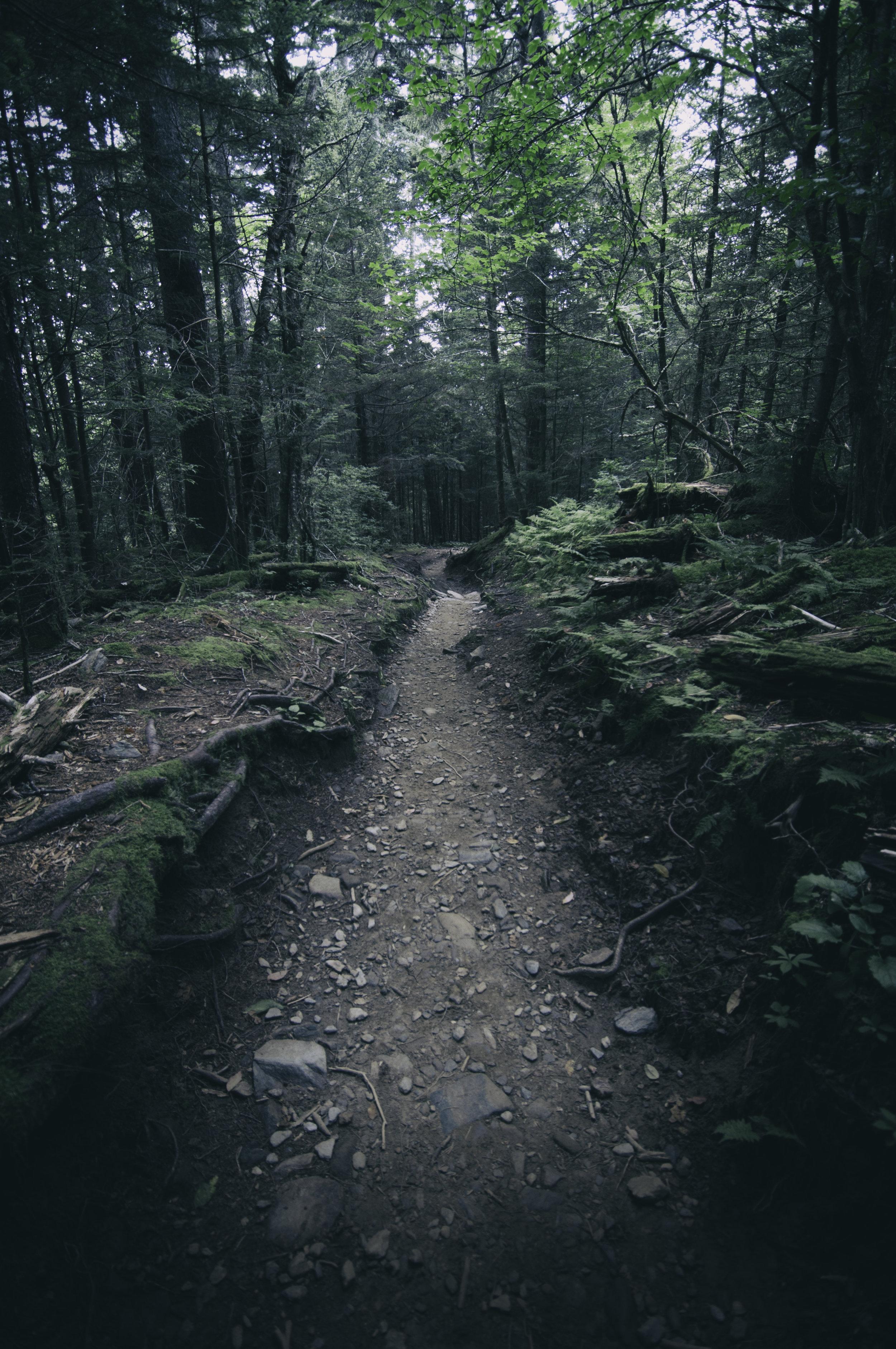 Nature_Woods_Pathway001.jpg