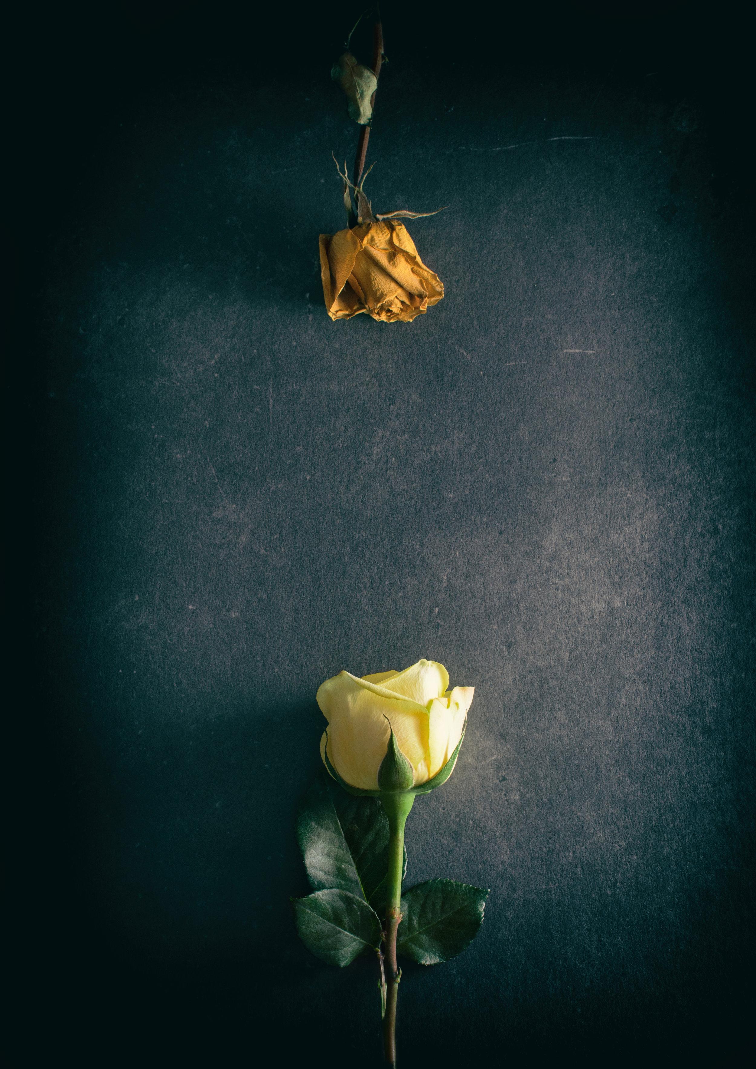 Nature_Detail_Roses005.jpg
