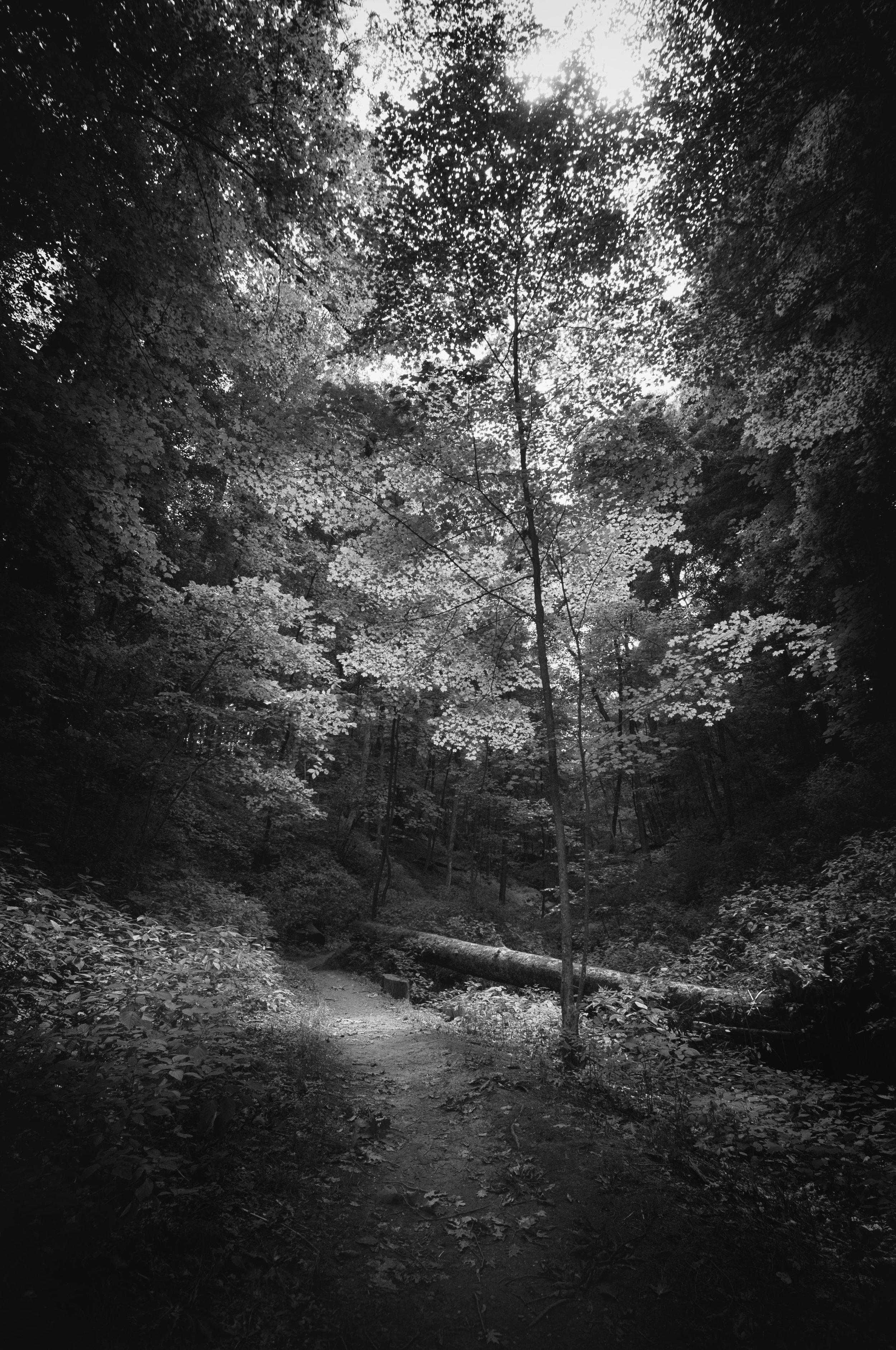 Landscape_Woods_Summer_OH003.jpg
