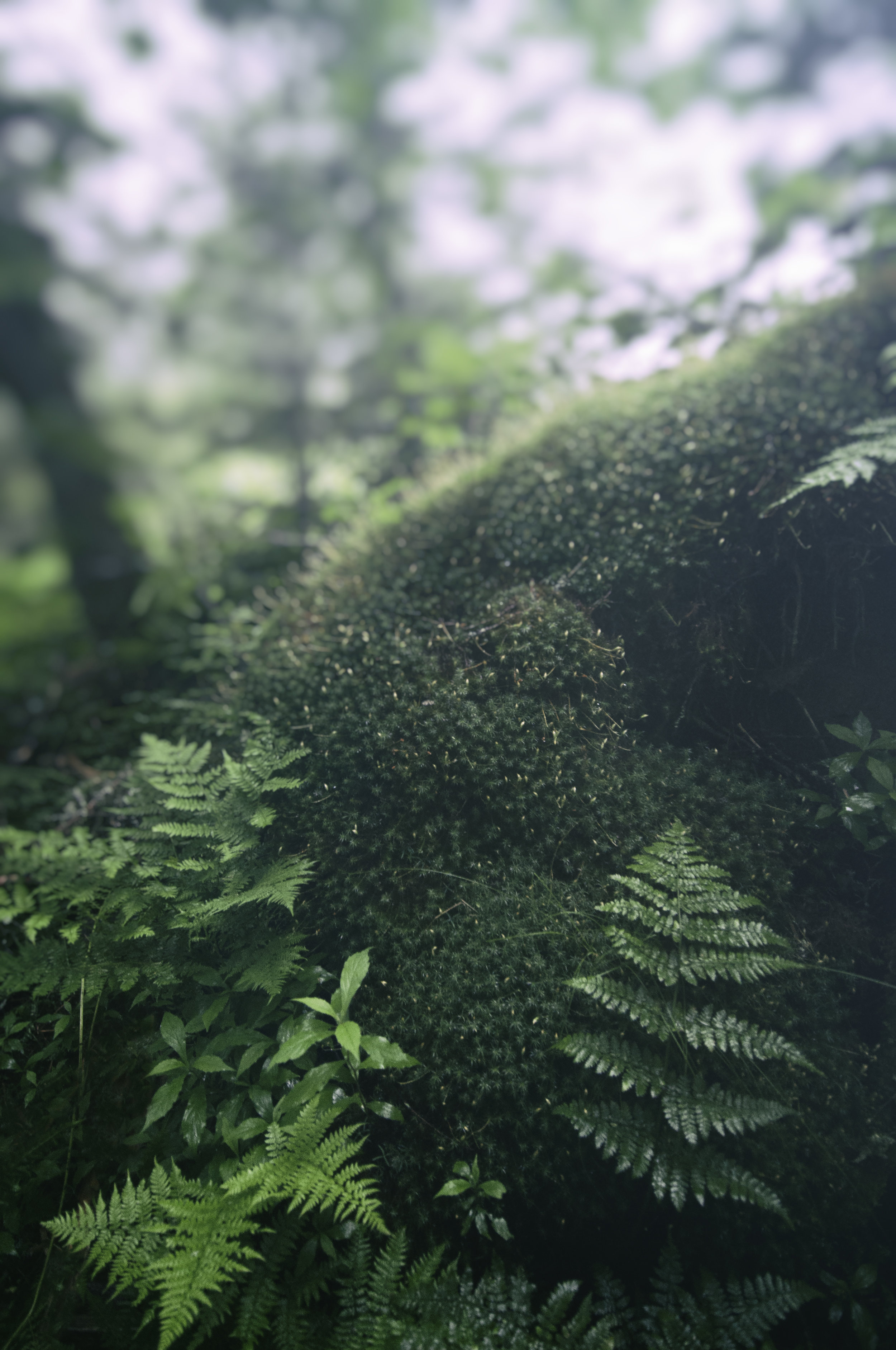 Nature_Detail_Fern004.jpg