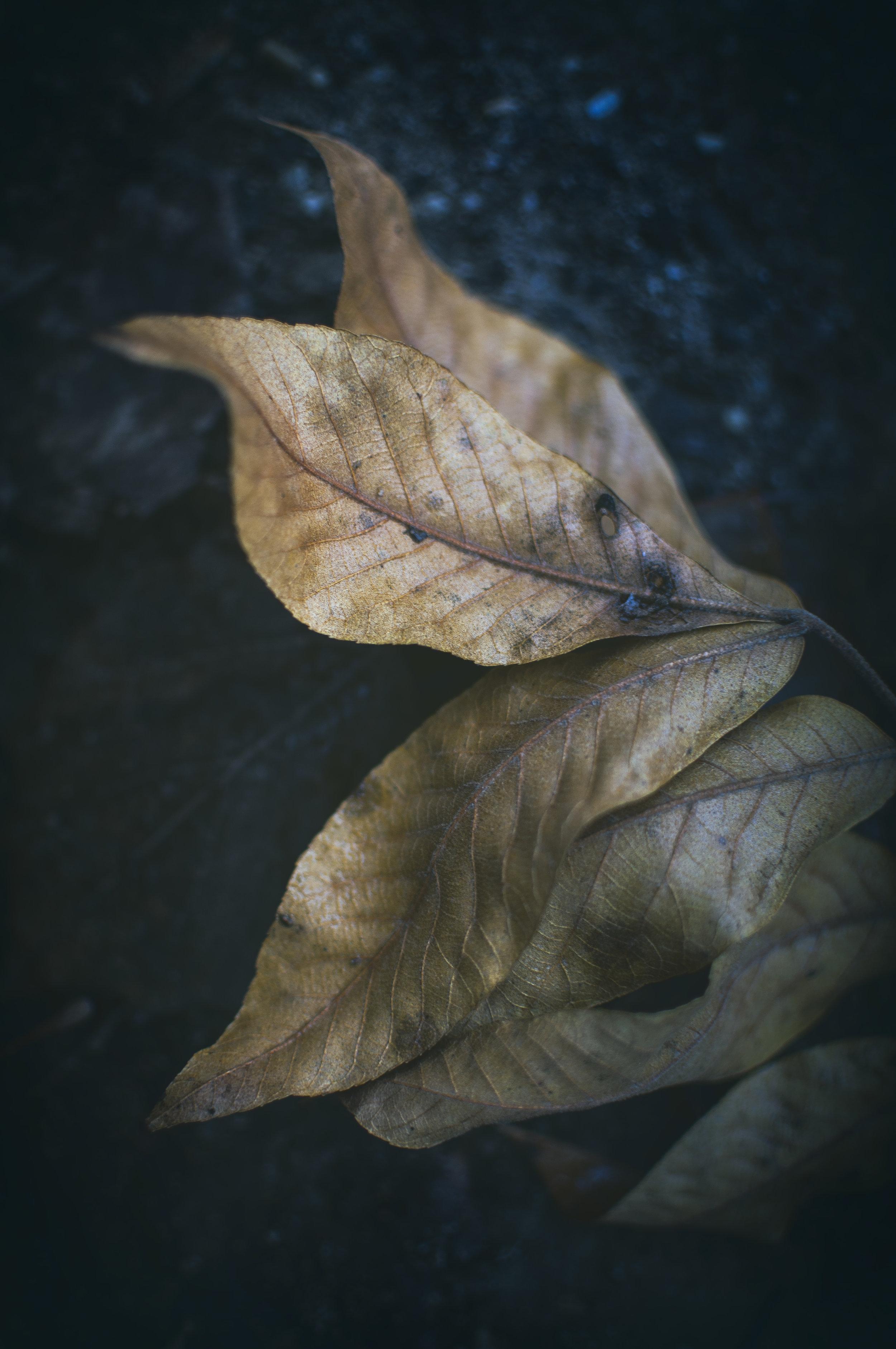 Nature_Detail_Leaf002.jpg