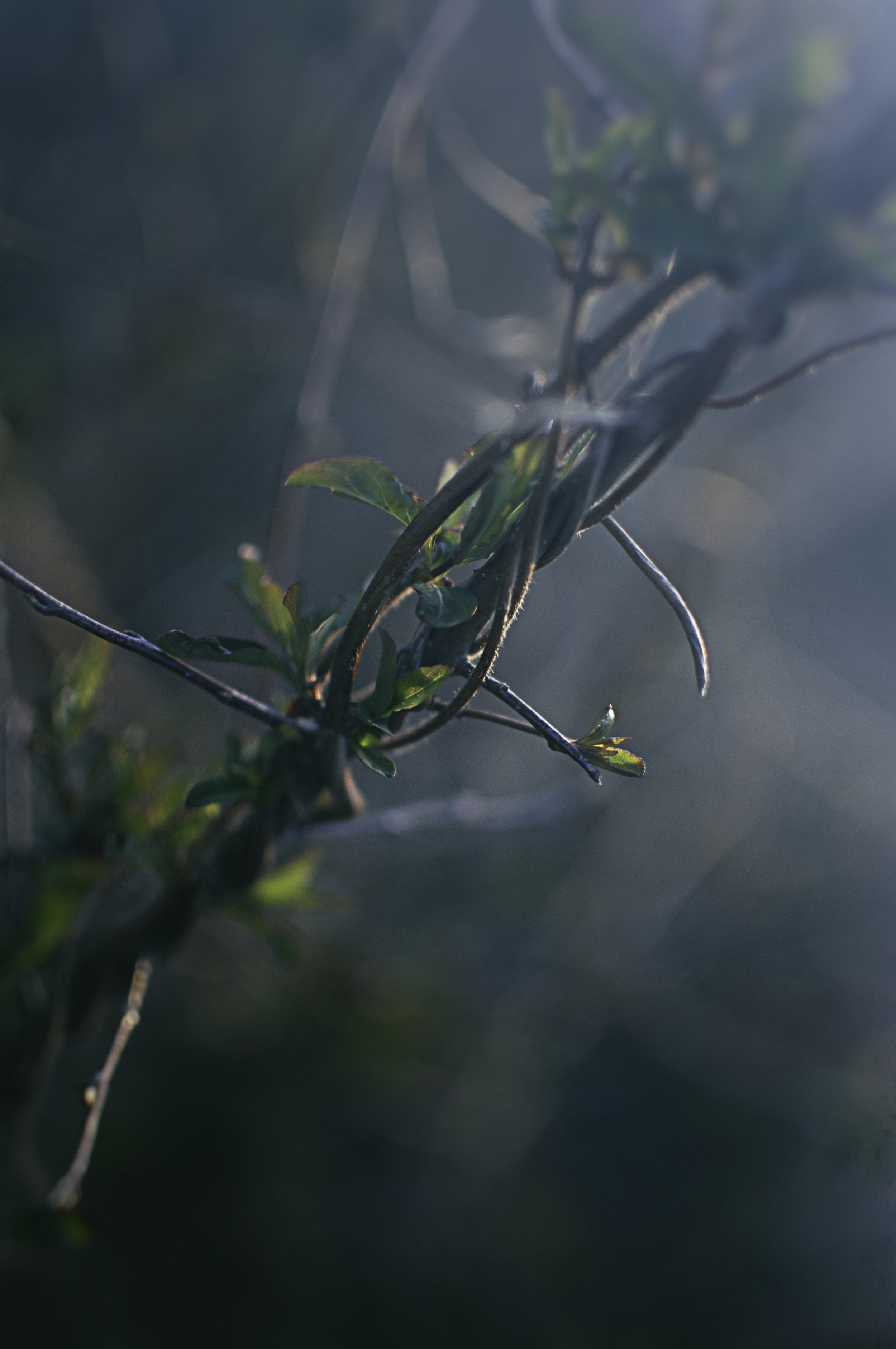 Nature_Detail_Vine001.jpg