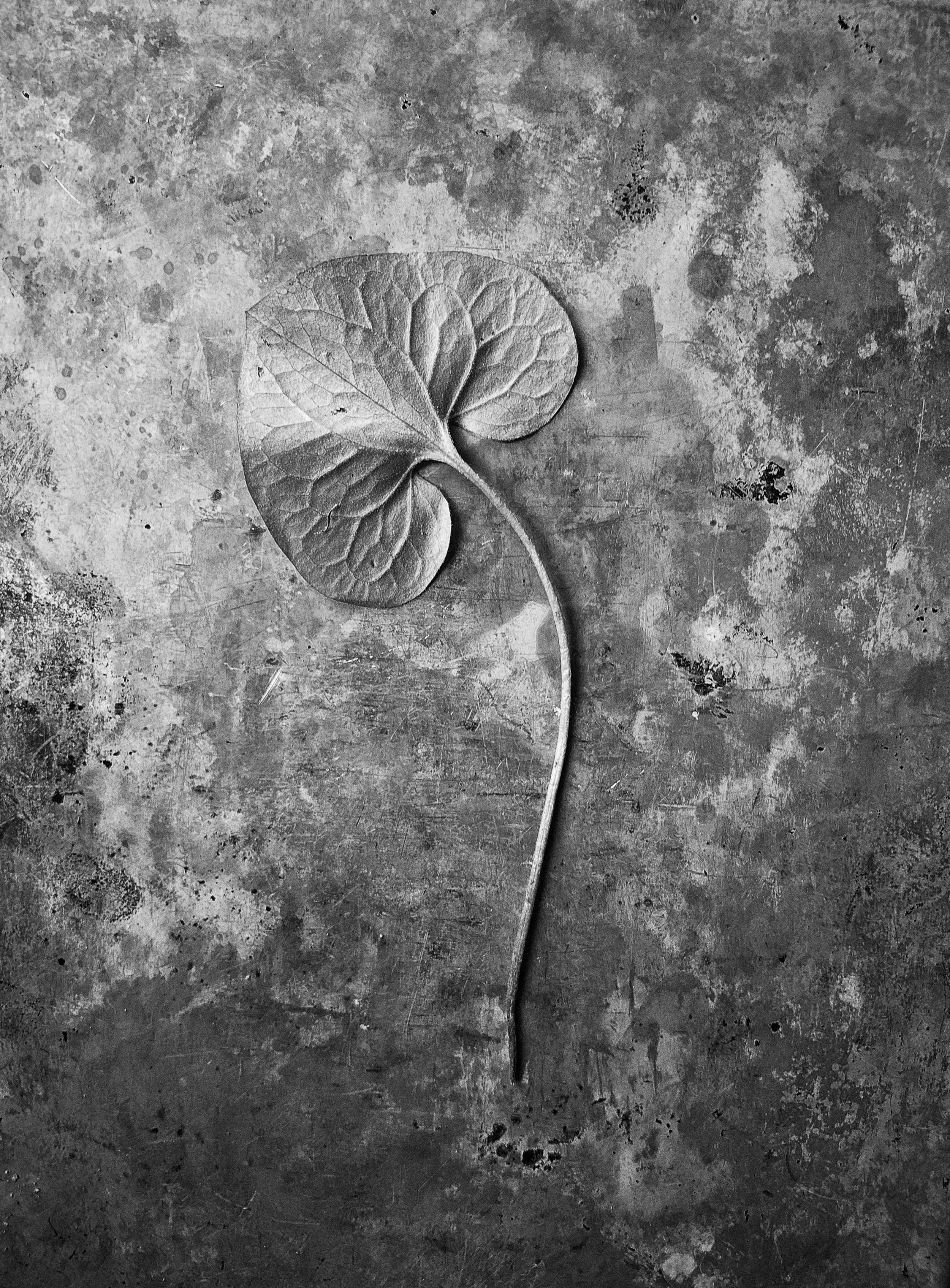 Nature_Detail_Leaf003.jpg
