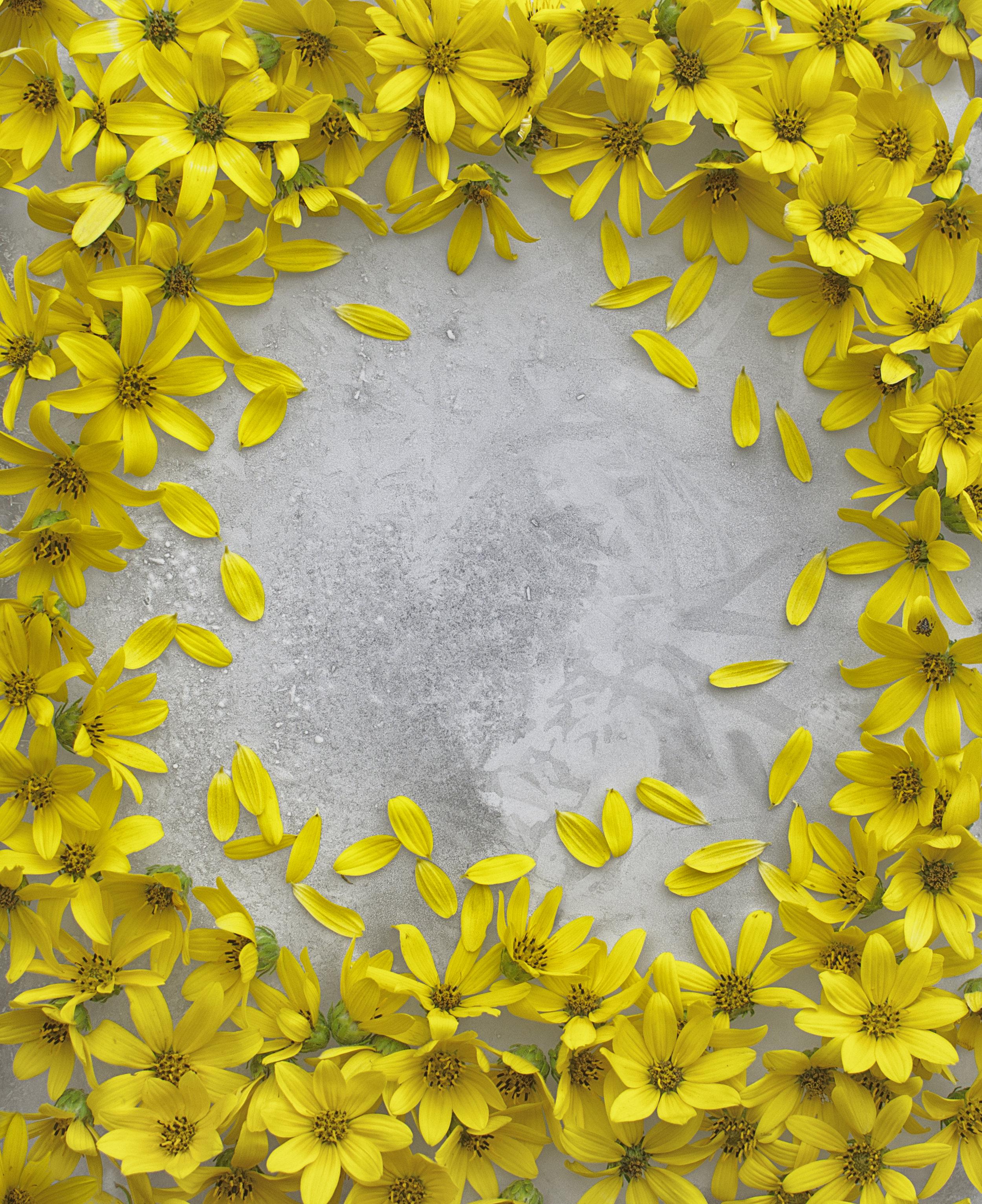 Nature_Center_Flower003.jpg