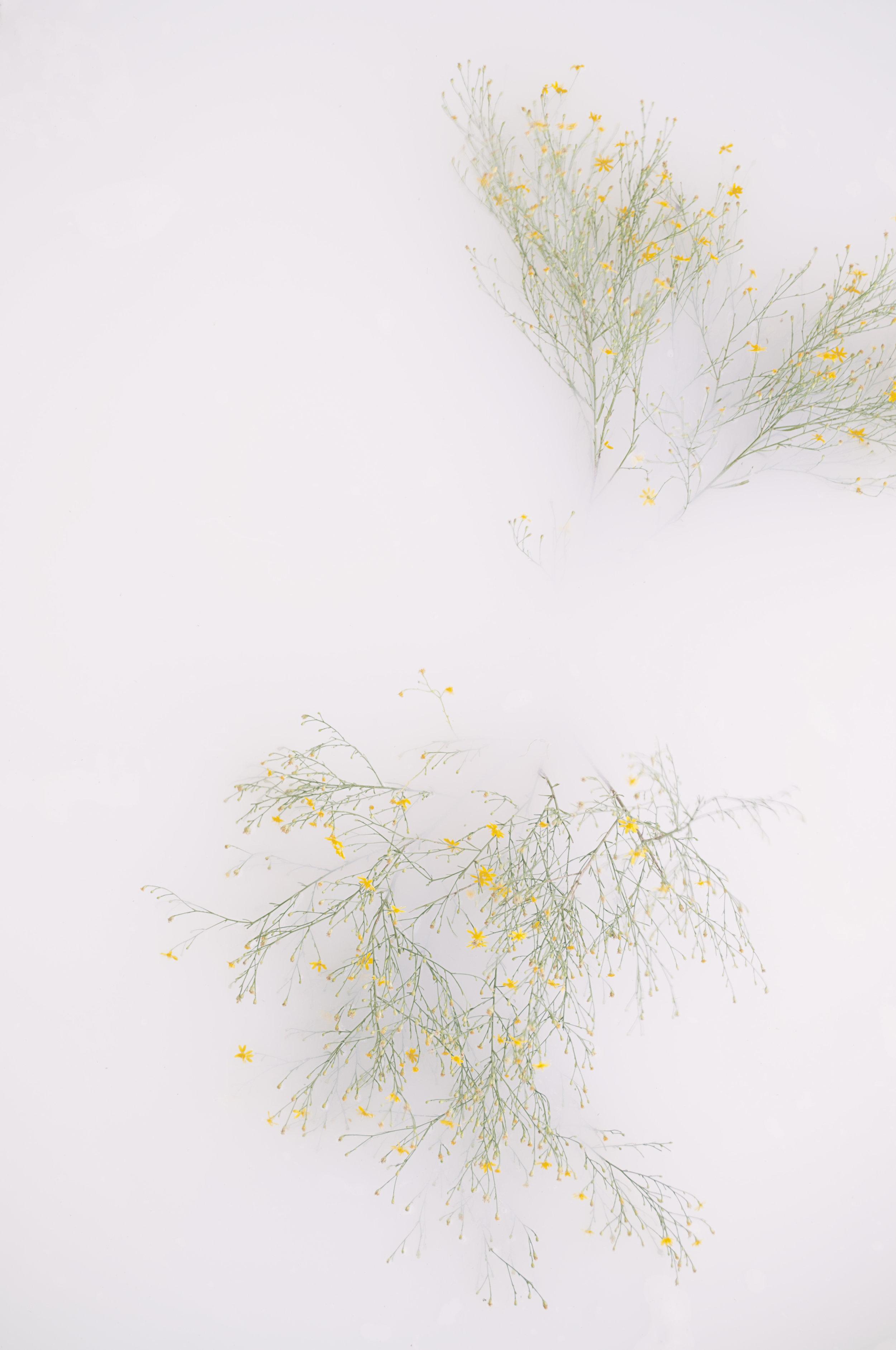 Nature_Detail_Flower003.jpg