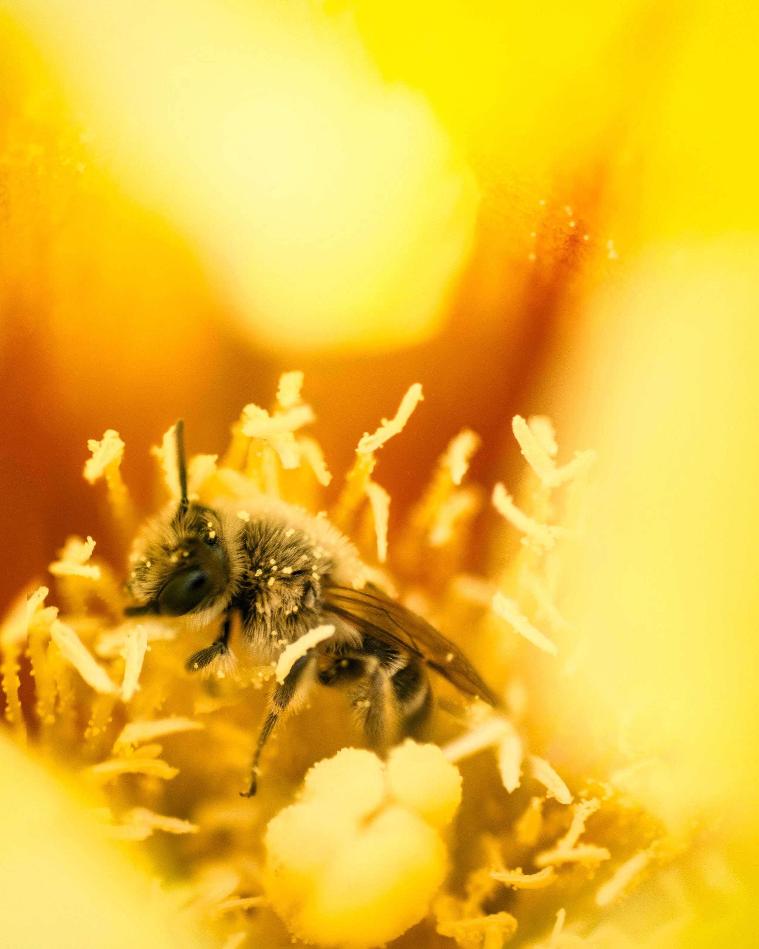 cactusflower_bee1.jpg